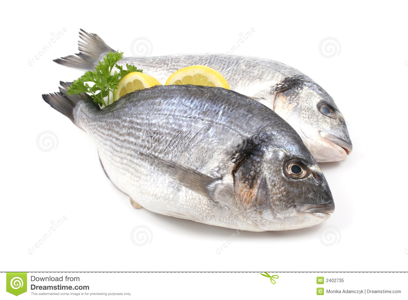 Dorada fish stock image image of parsley fish fishes for Photos of fish