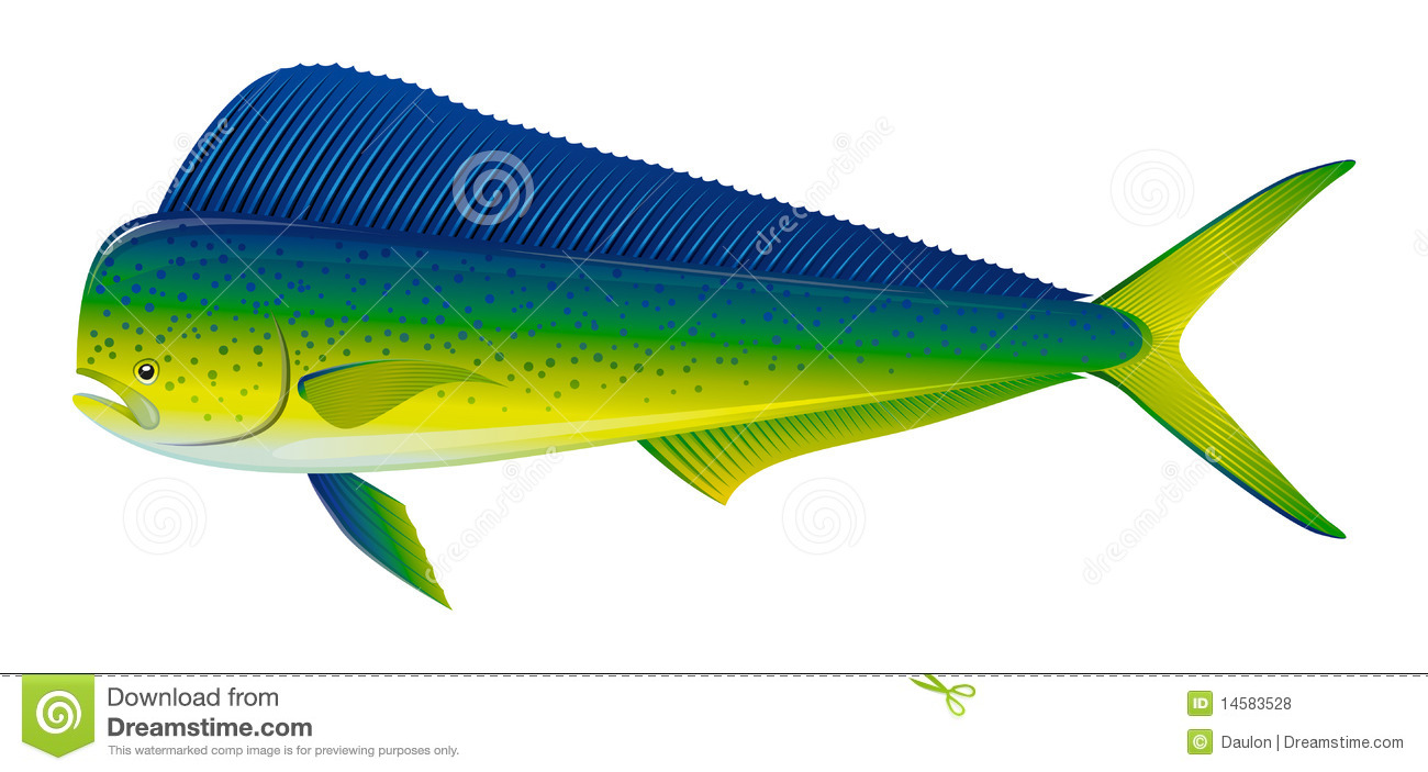 Dorado fish stock vector illustration of isolated sport for Image of fish