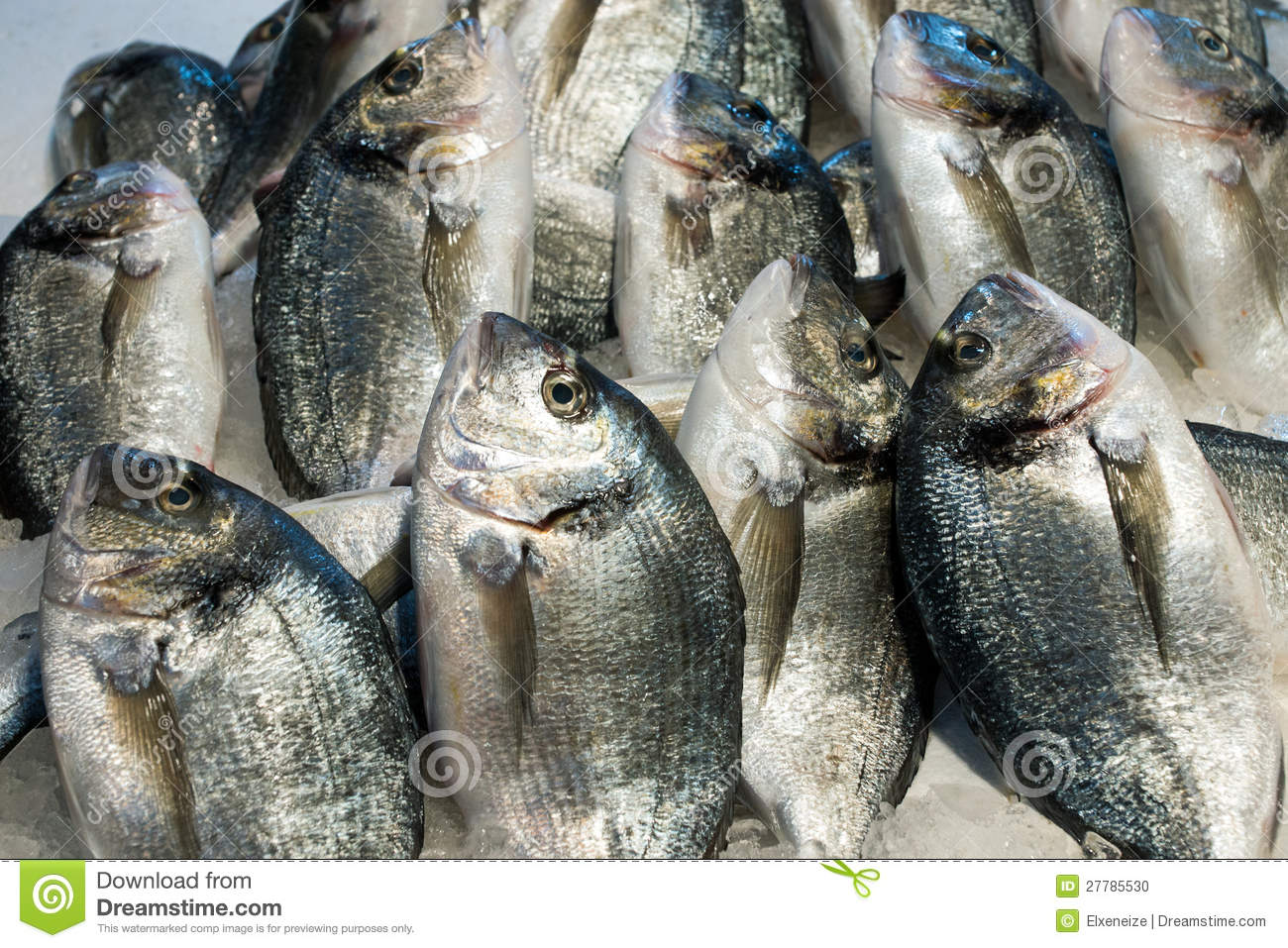 Dorado fish for sale stock photo image 27785530 for Stock fish for sale