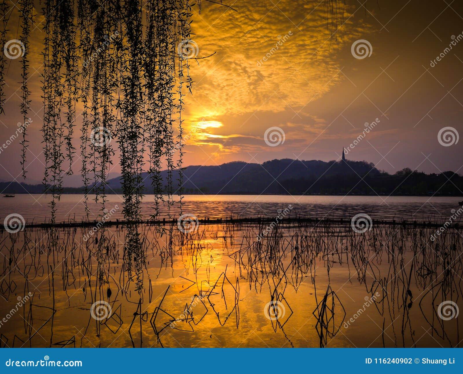 Dorato si rannuvola il lago con la montagna nella distanza Siluetta dei gambi del loto e dei rami di albero morti del salice cont