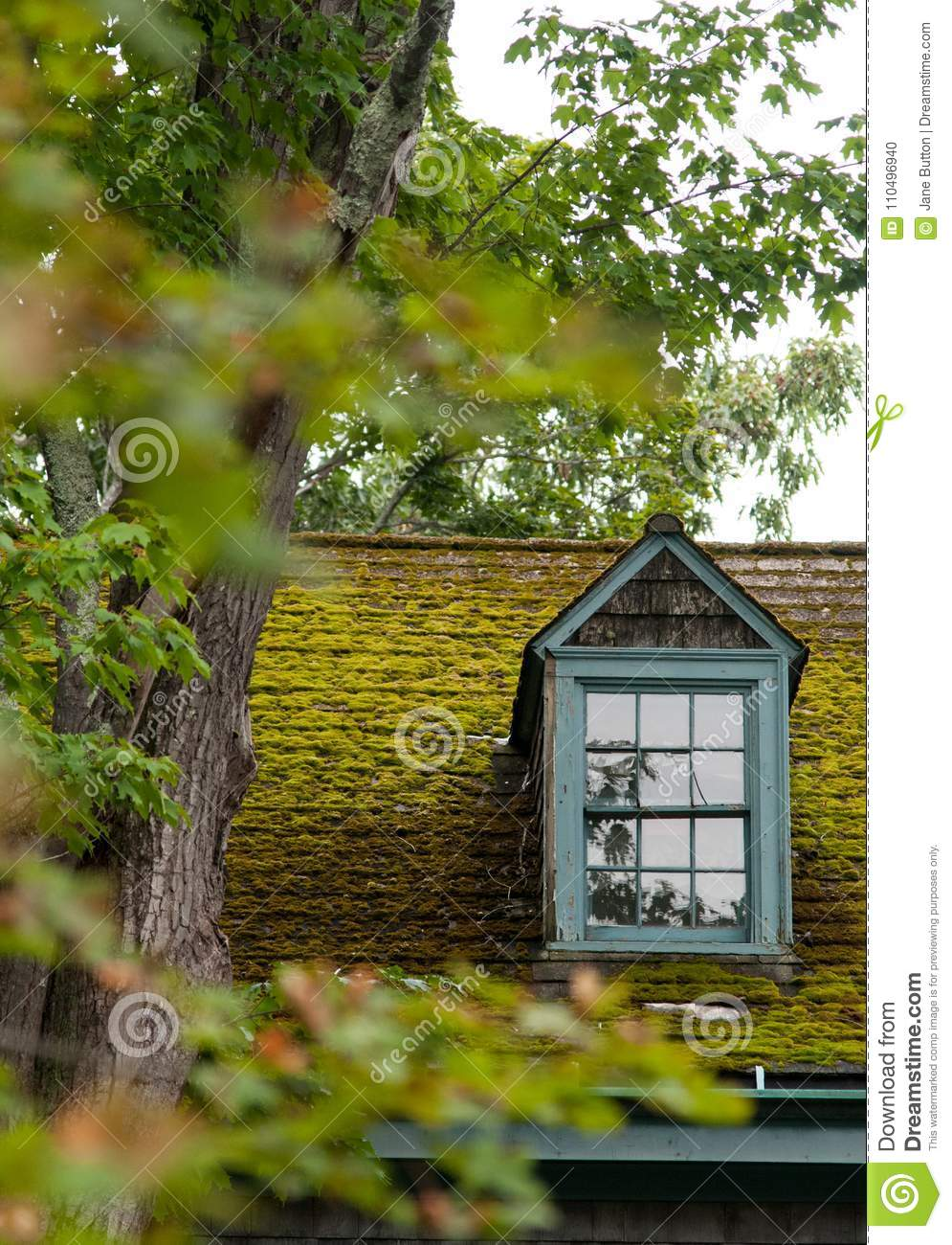 Dormer window and moss covered roof of an old shingle style cape cod house