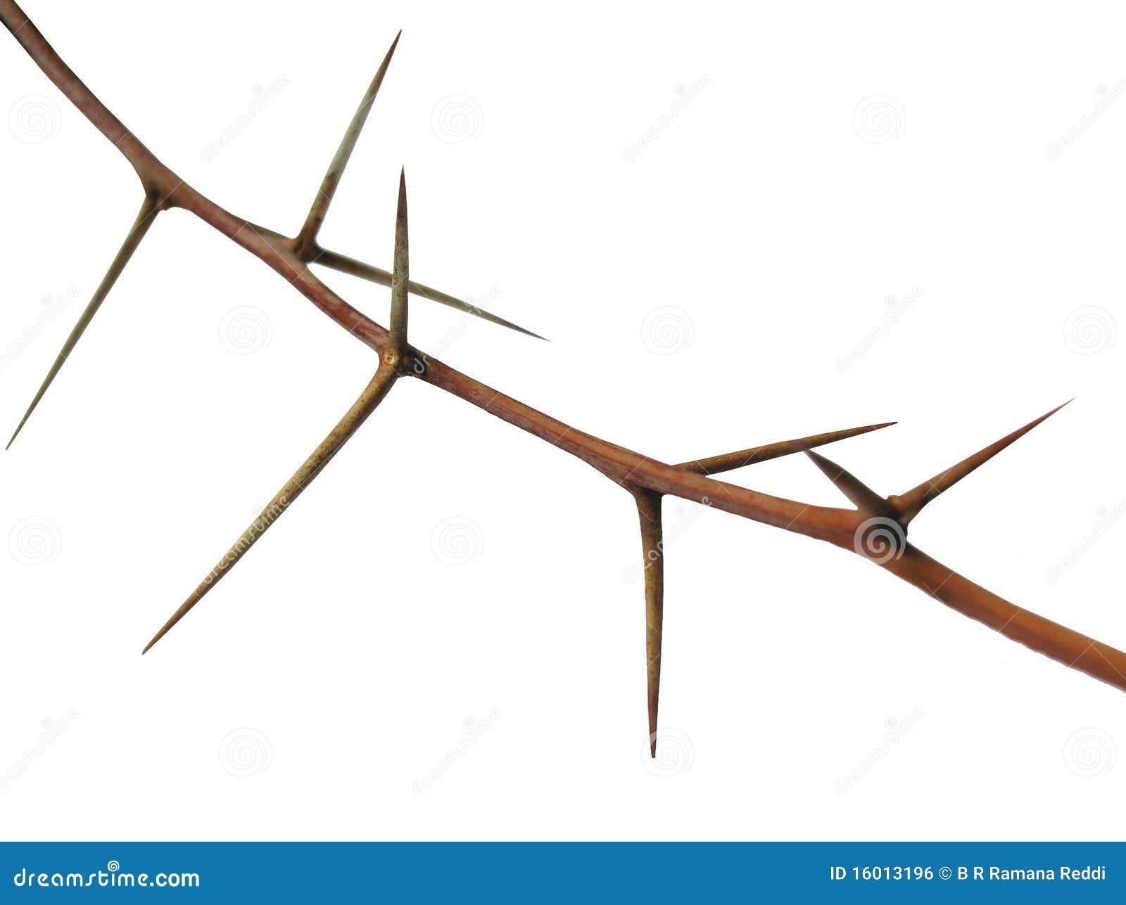 Dornen Stockfoto Bild Von Crucifixion Katholisch Ostern