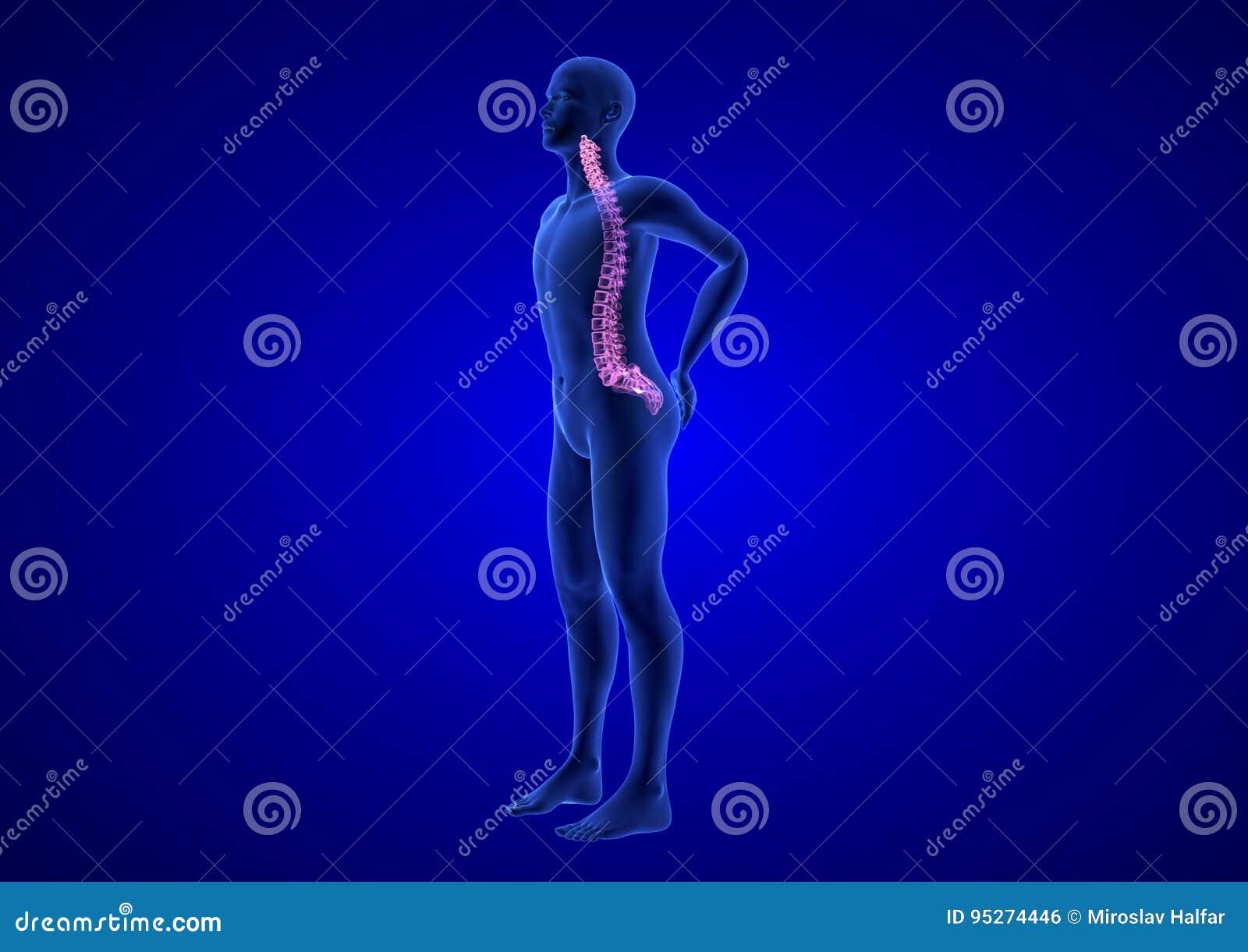 Dornschmerz Blauer Menschlicher Anatomie-Körper 3D übertragen Auf ...