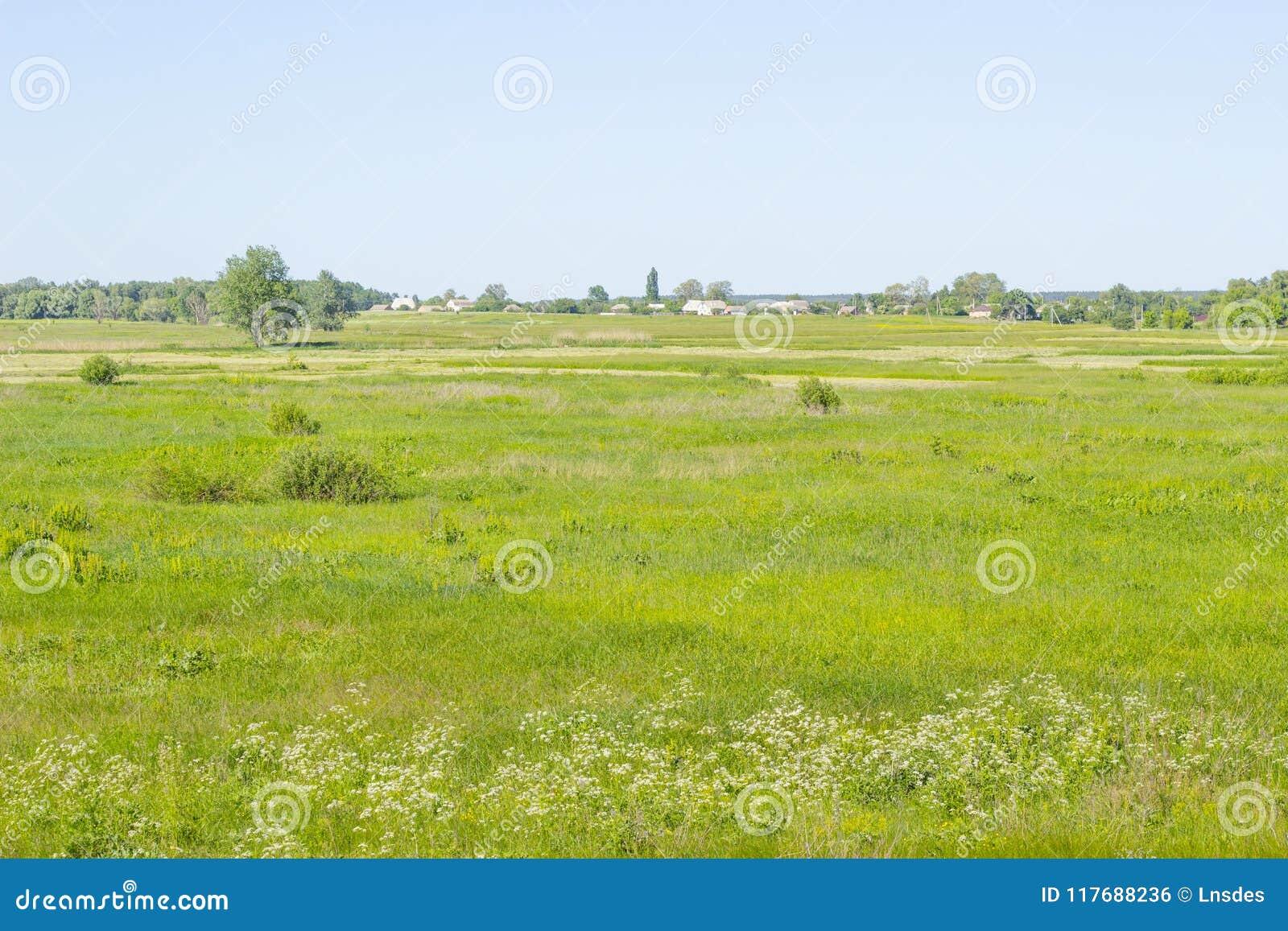 Dorps landelijk landschap met groene gebied en buitenhuizen, de zomerweide, gras op een weiland, gebied, aardachtergrond