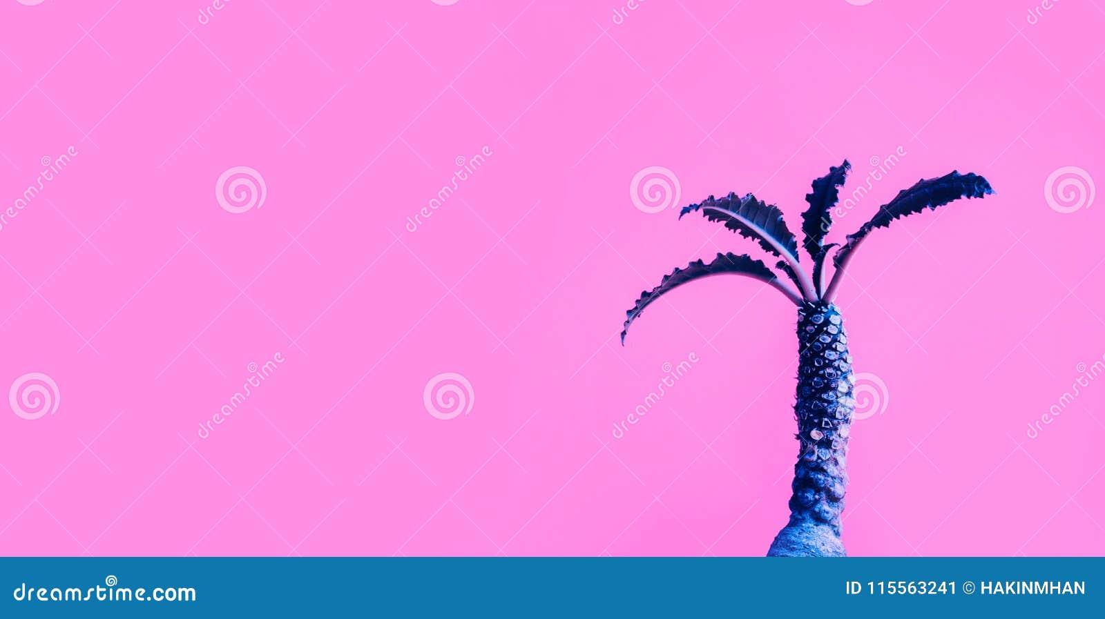 Dorstenia仙人掌的异乎寻常的颜色在五颜六色的背景的