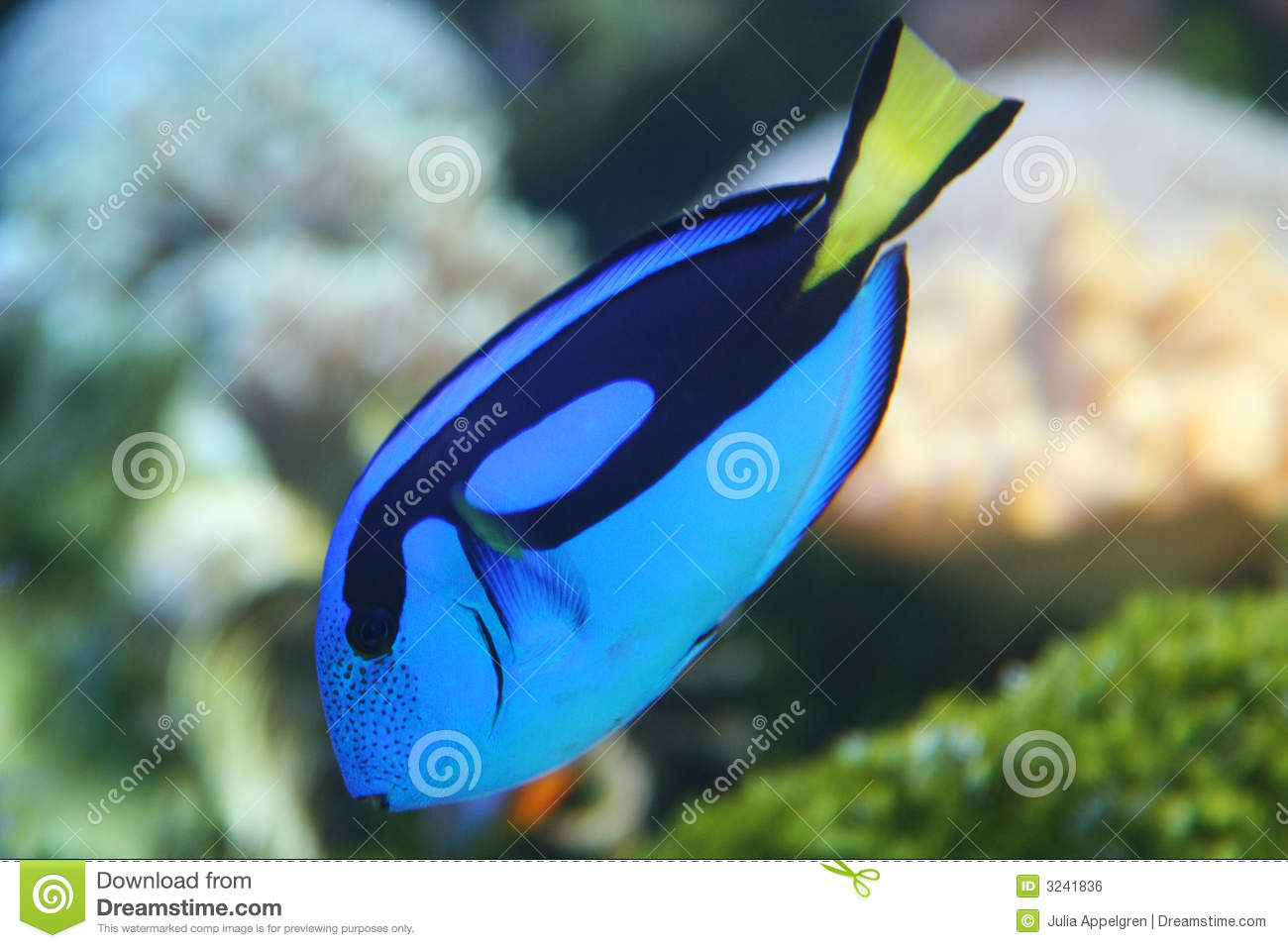 Dory the fish stock photo image of under swimming diver for Picture of dory fish