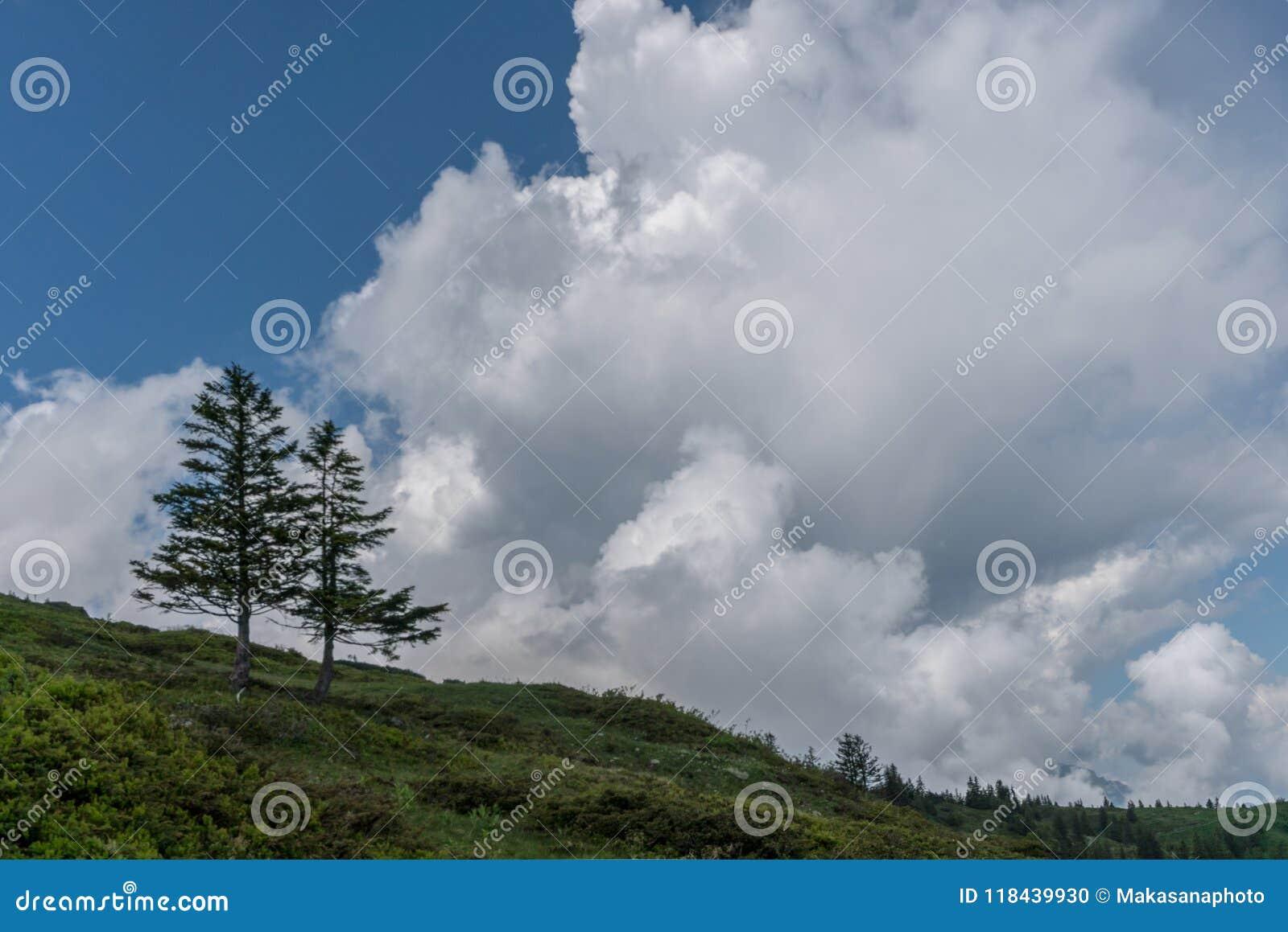 Dos árboles de pino solitarios en el horizonte debajo de un cielo nublado salvaje y expresivo