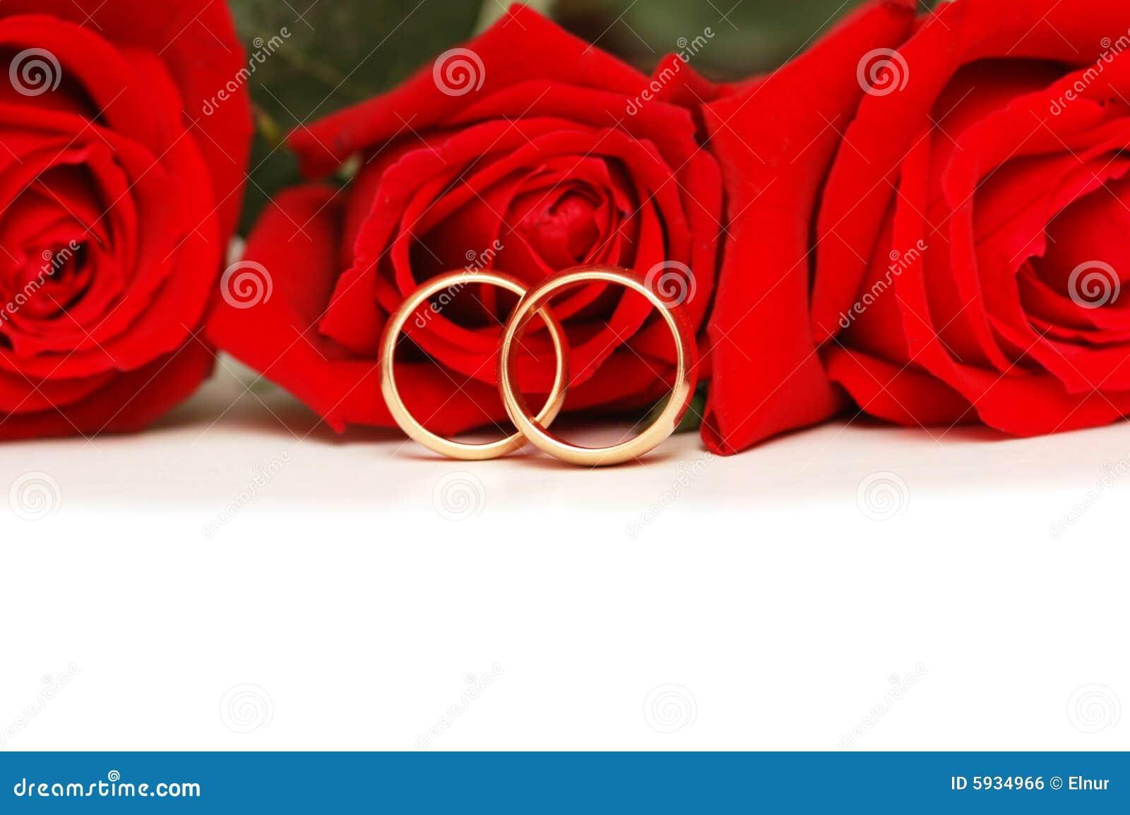 f7fa56015347 Dos anillos de bodas y rosas rojas aislados en blanco imagen de archivo  libre de regalías