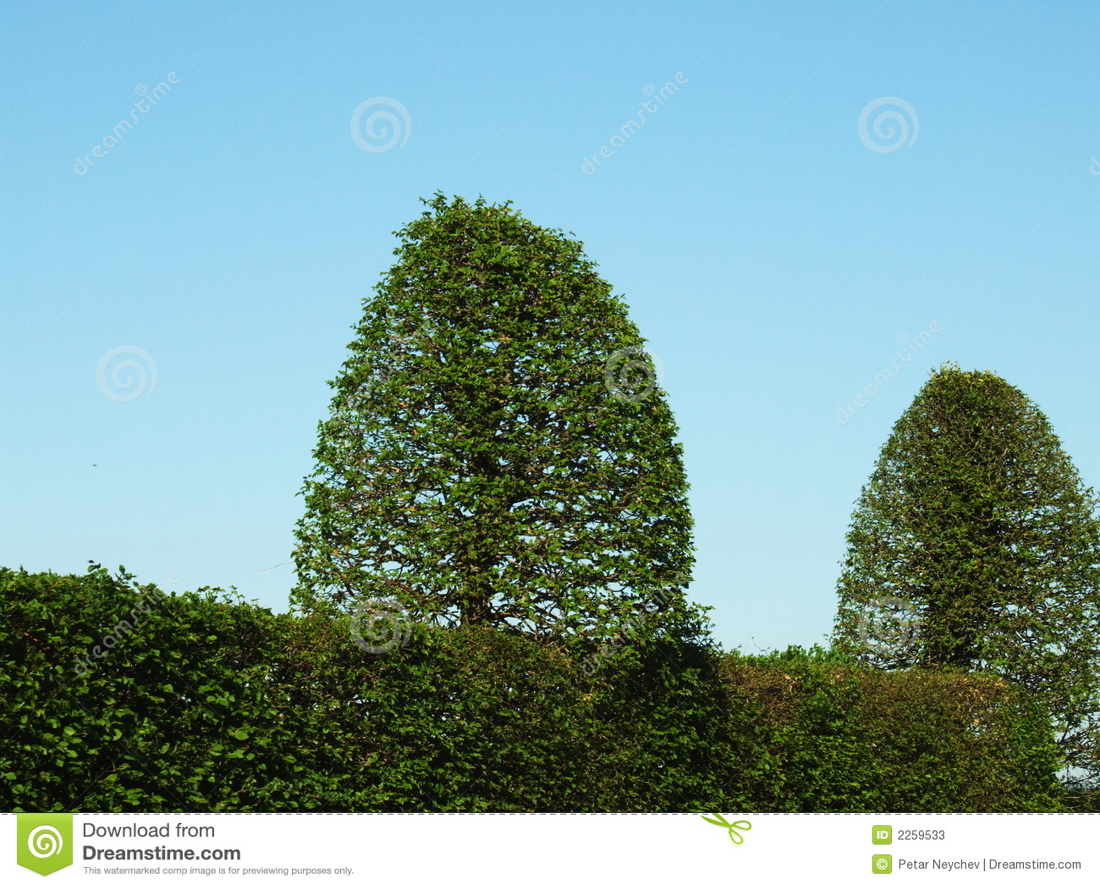 Dos arbustos verdes fotos de archivo imagen 2259533 for Arbustos decorativos jardin