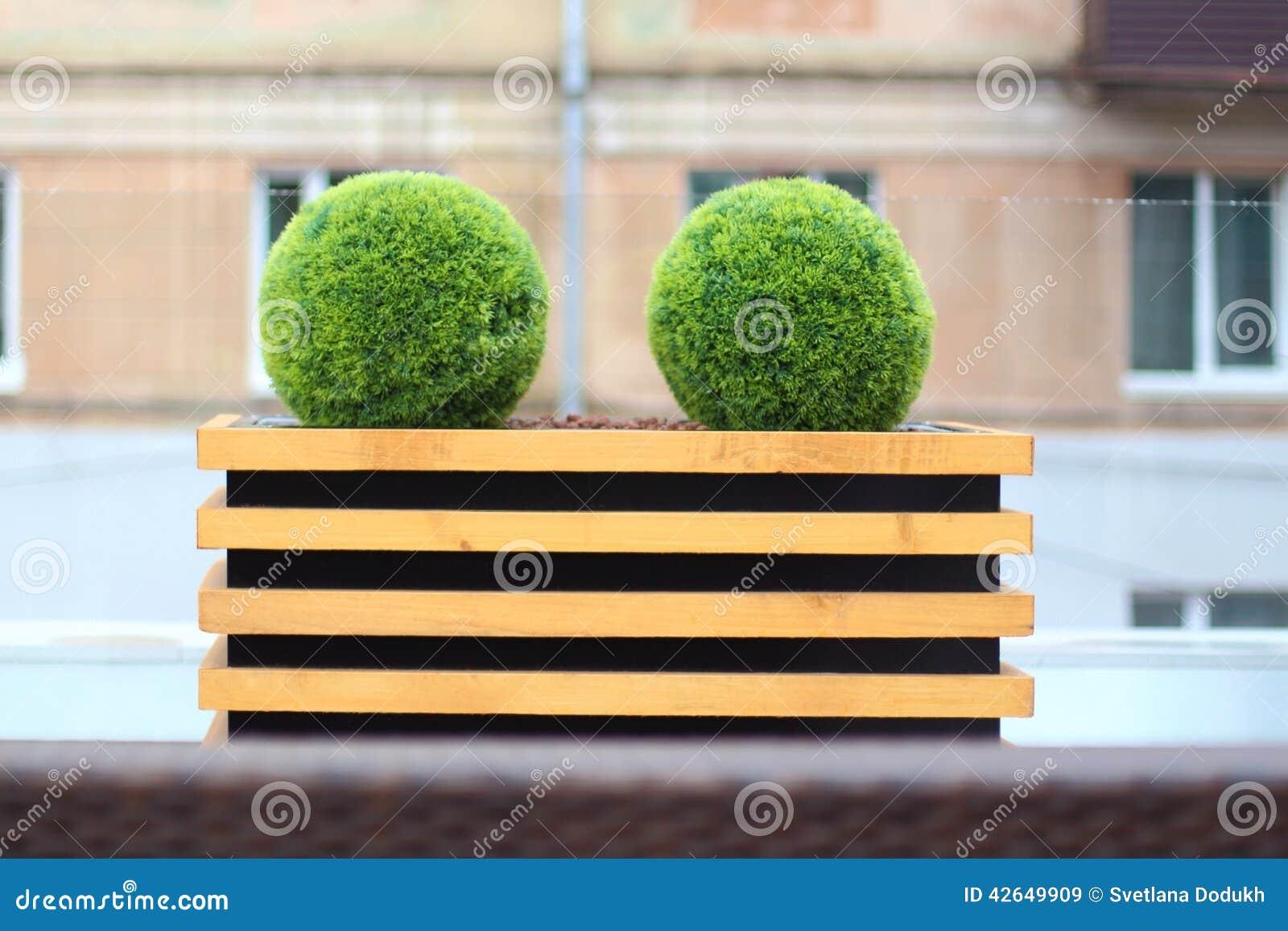 Dos arbustos verdes decorativos en la forma de la bola en for Arbustos decorativos