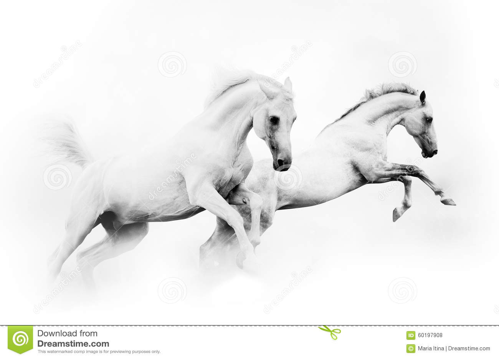Dos caballos blancos potentes