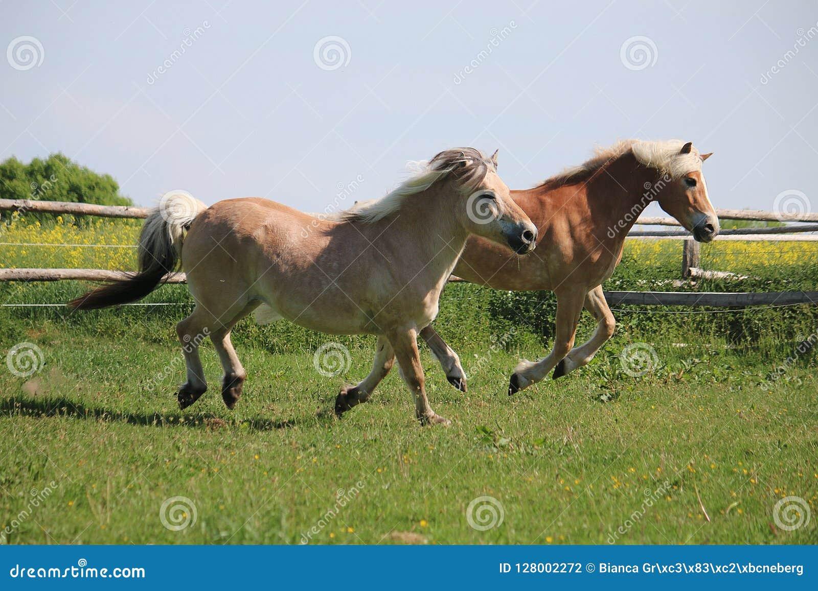 Dos caballos corrientes