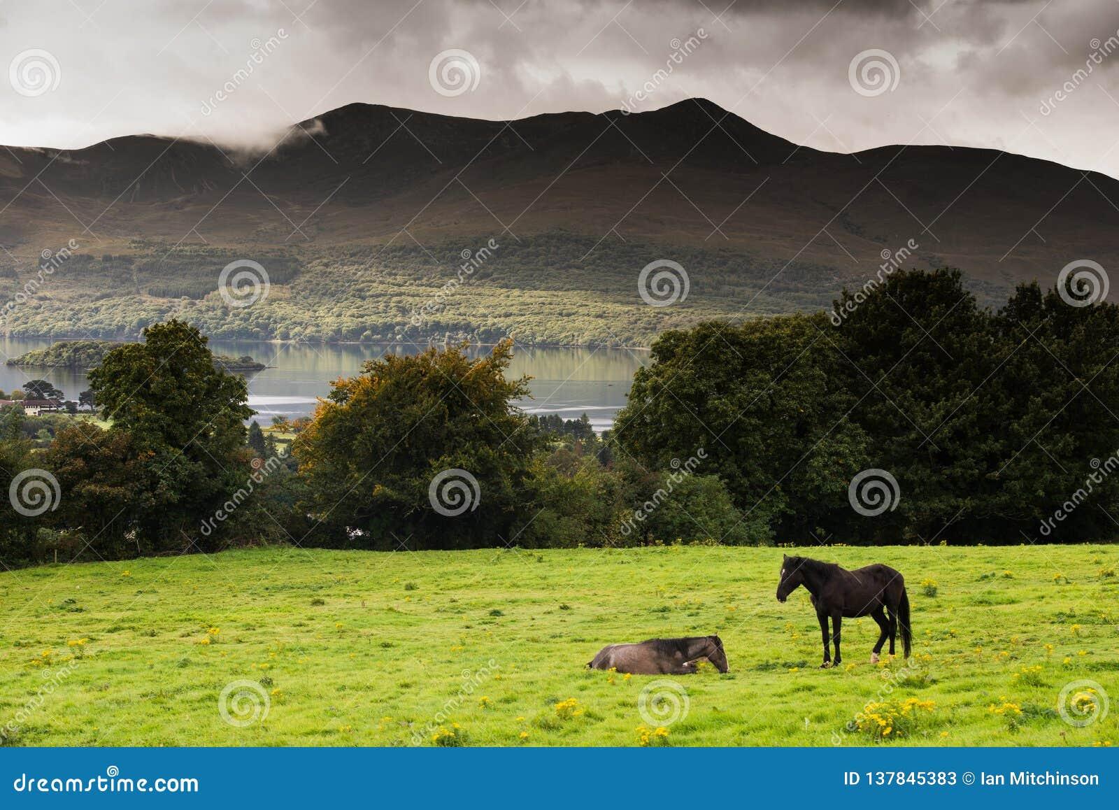 Dos caballos en un campo en el anillo de Kerry, Irlanda