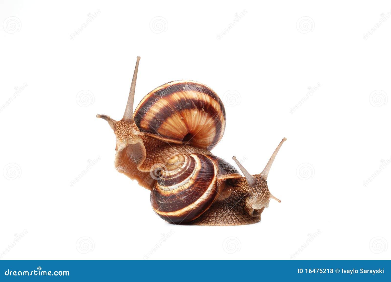 Dos caracoles divertidos