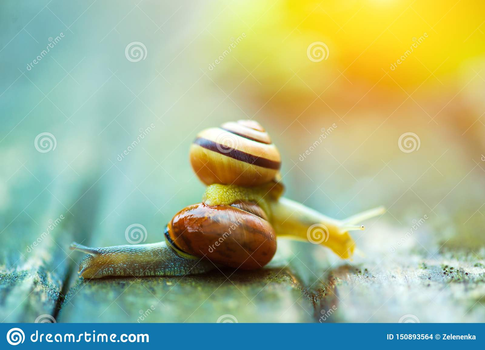 Dos caracoles que se mueven en las direcciones opuestas, una vieja superficie de madera