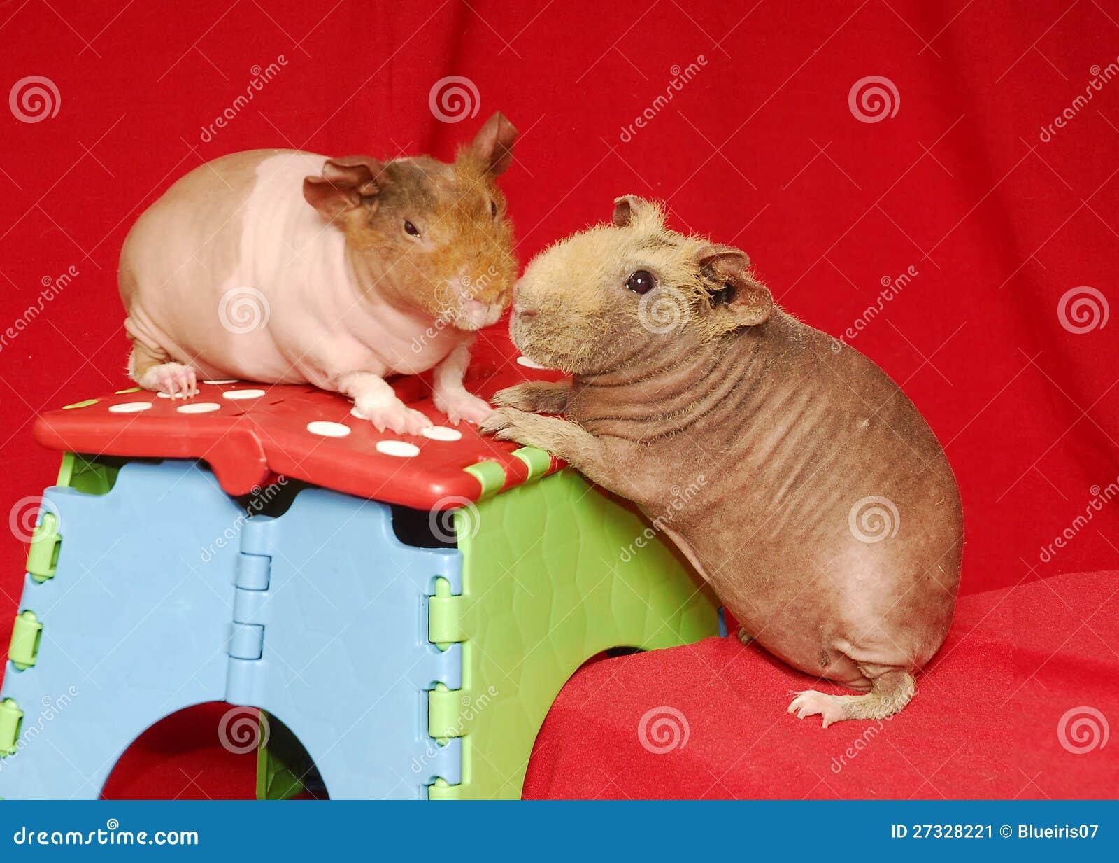Imagen de archivo: Dos cerdos flacos