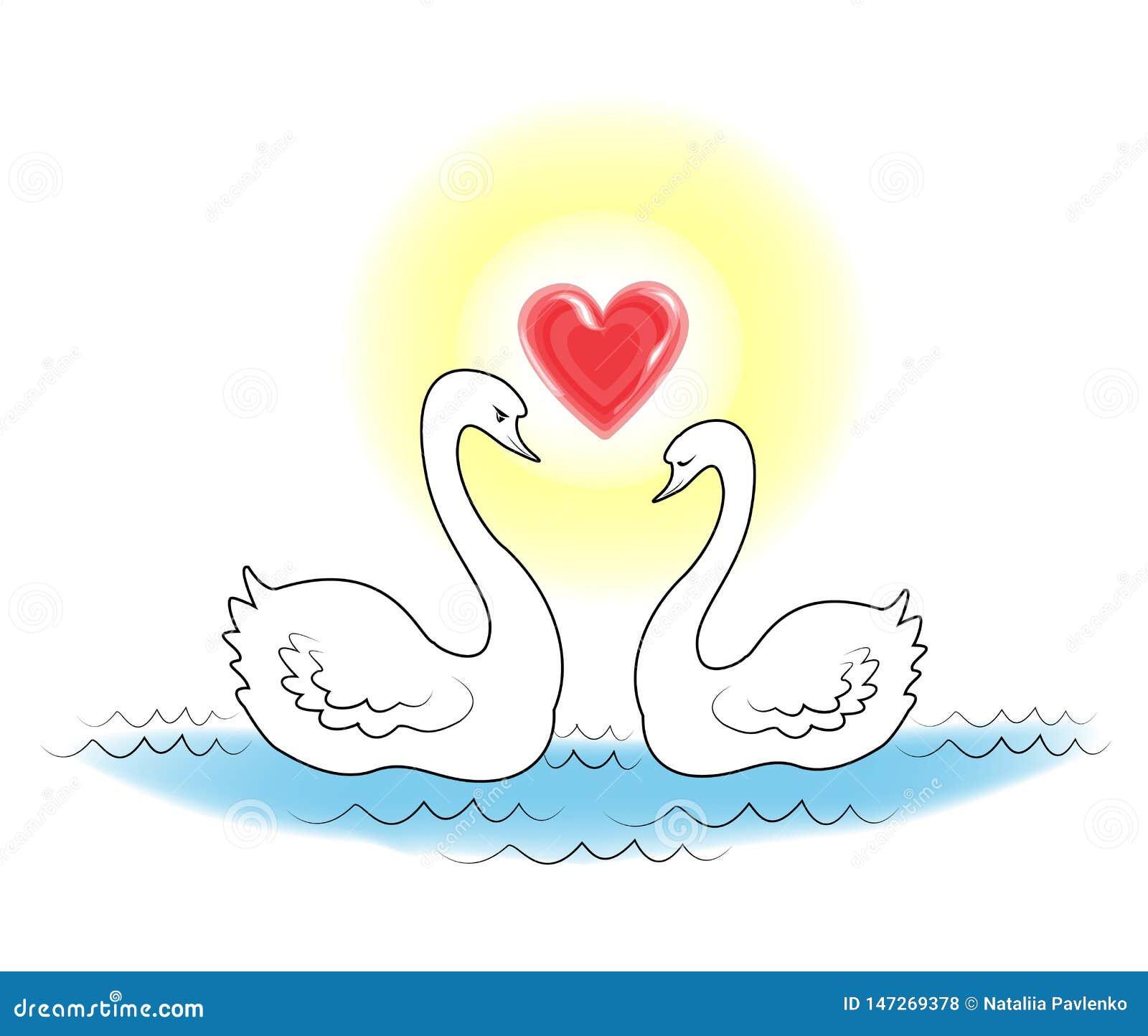 Dos cisnes blancos Los p?jaros en nadada del amor en el agua El sol brilla en la forma del corazón Amor rom?ntico Ilustraci?n del