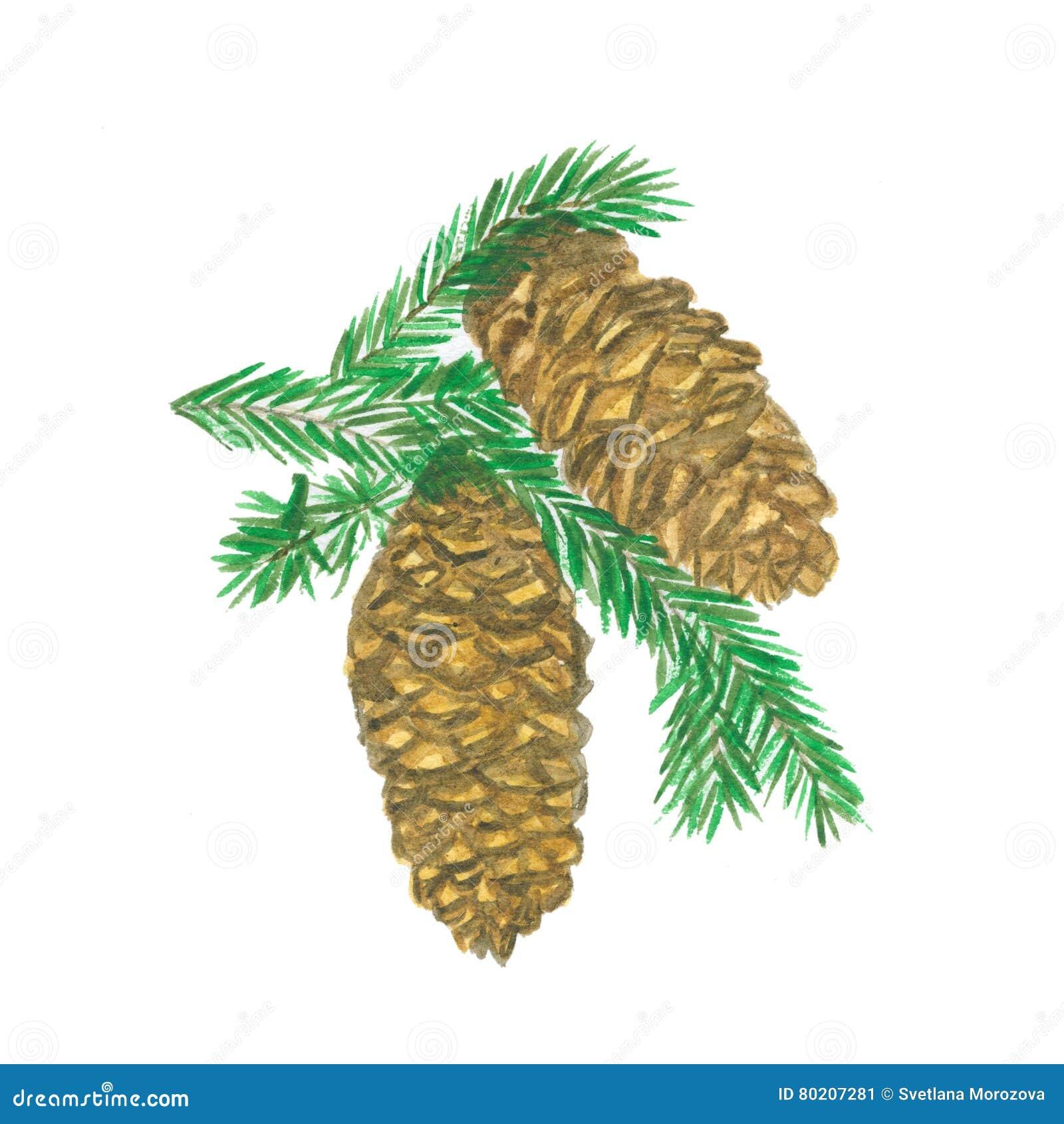 Dos conos del pino con la ramificación