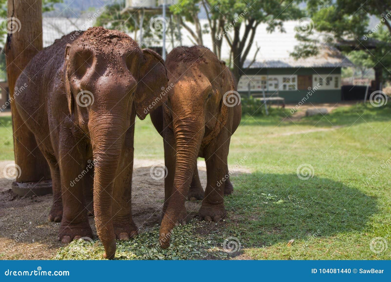 Hermosa Elefante Anatomía Del Sello Motivo - Imágenes de Anatomía ...