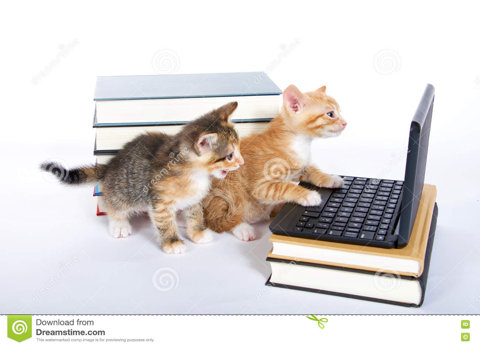 Dos gatitos con el ordenador portátil y los libros