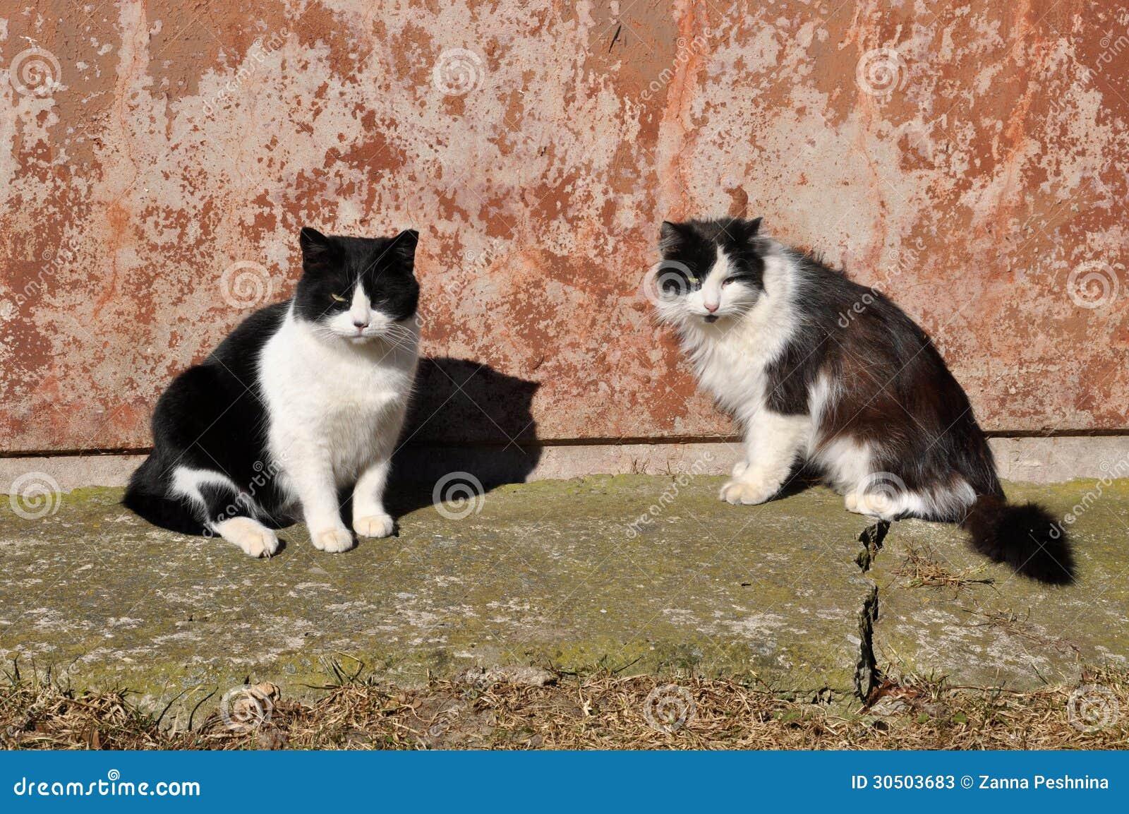 Presentar un nuevo gatito a un gato adulto - Hills Pet