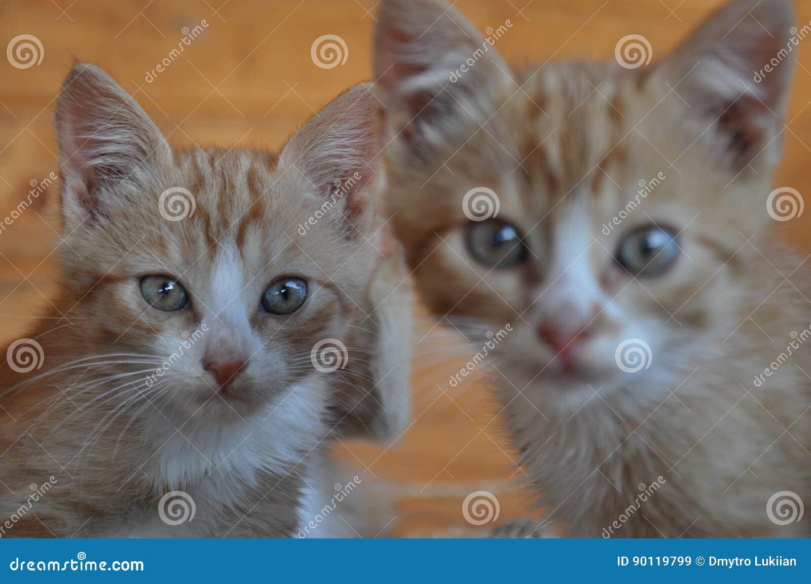 Dos Gatos Rojos Con Los Ojos Sorprendidos Imagen De Archivo Imagen