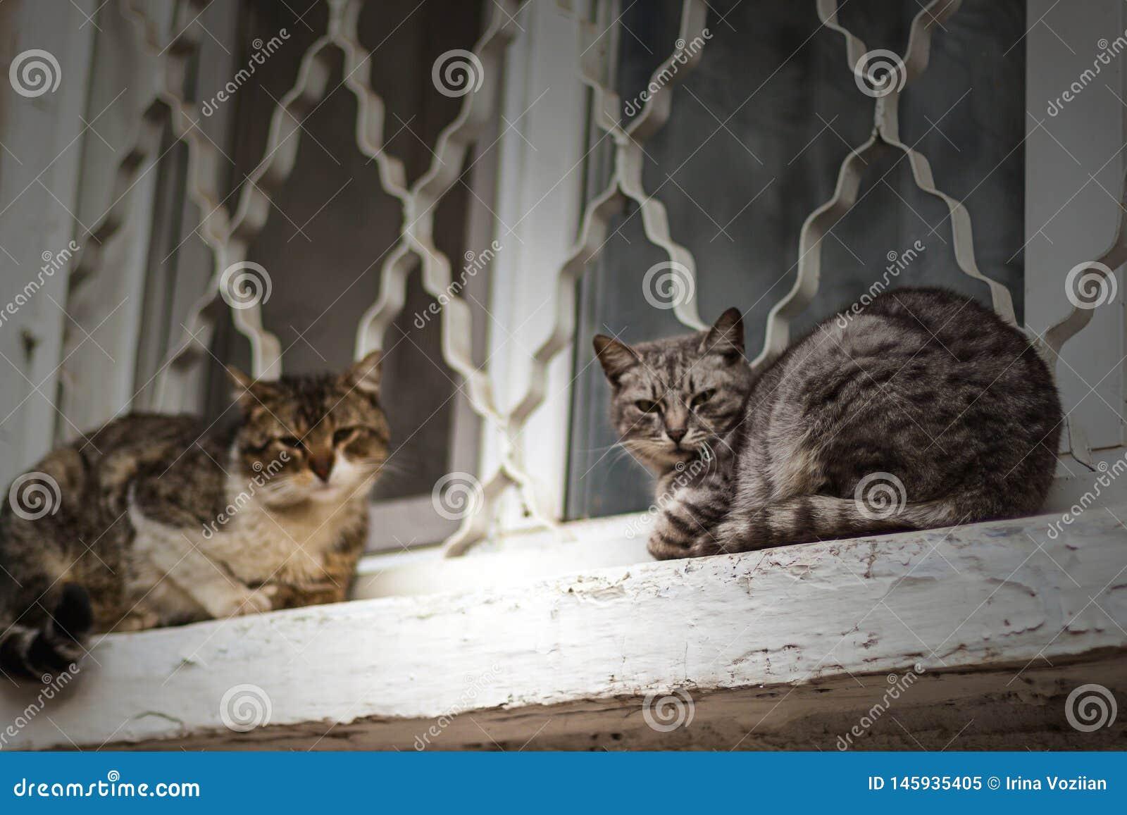 Dos gatos sin hogar se sientan en el travesaño blanco de la ventana