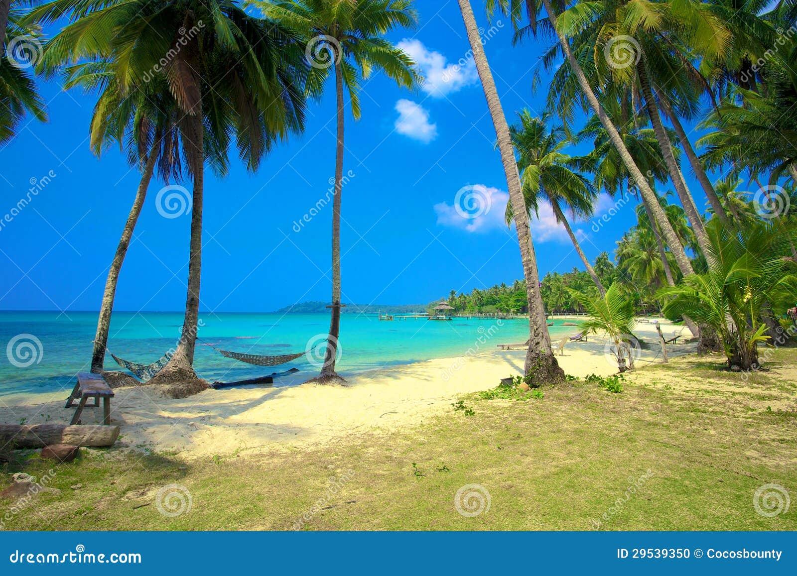 Dos hamacas en una playa tropical foto de archivo imagen - Hamacas de playa ...