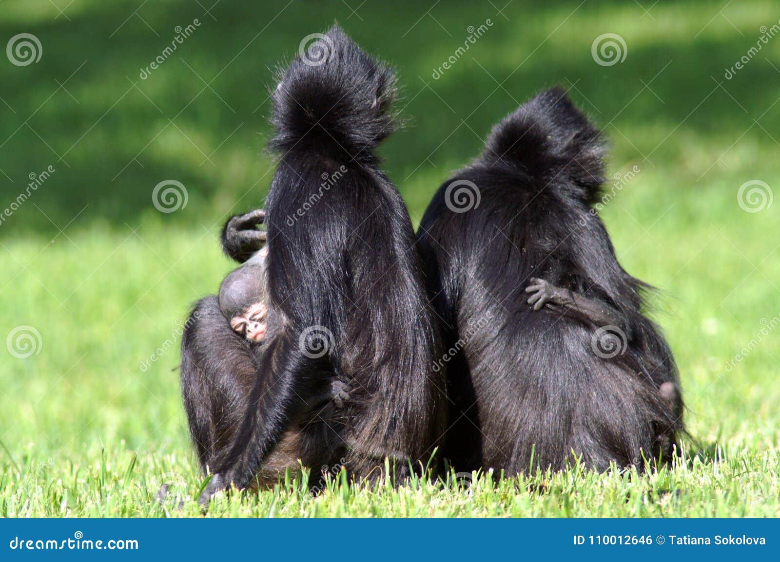Dos hembras con los cachorros Dos mamáes con los monos y los niños Mamá y el niño
