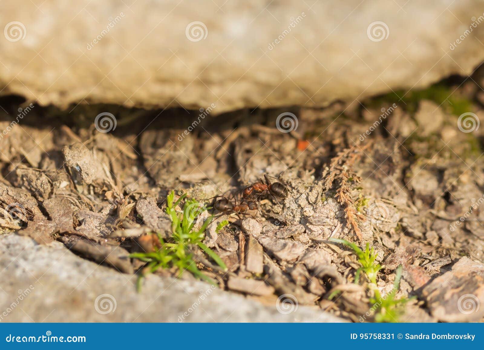 Dos hormigas en el jardín imagen de archivo. Imagen de agricultura ...