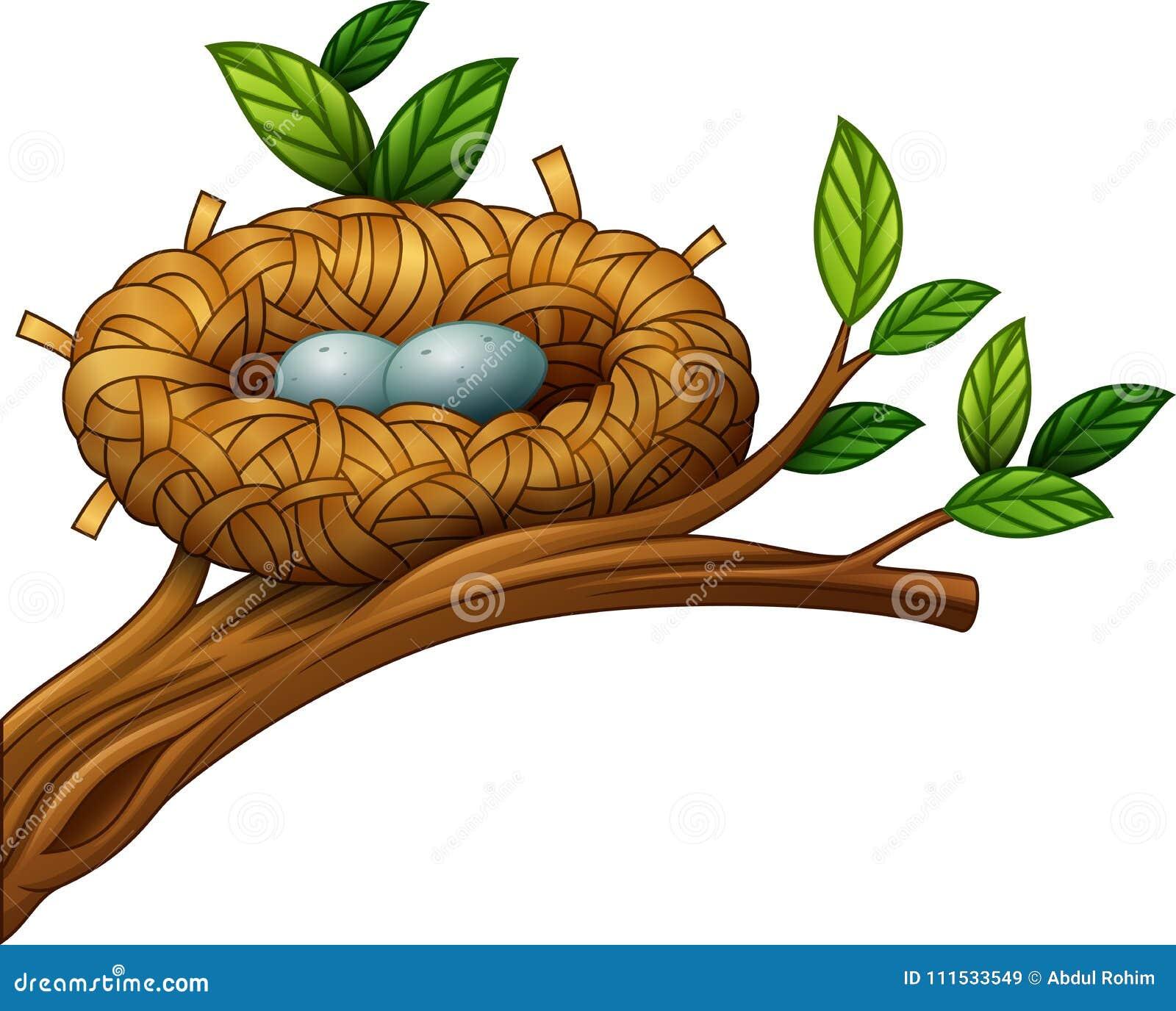 Dos huevos en jerarquía del pájaro