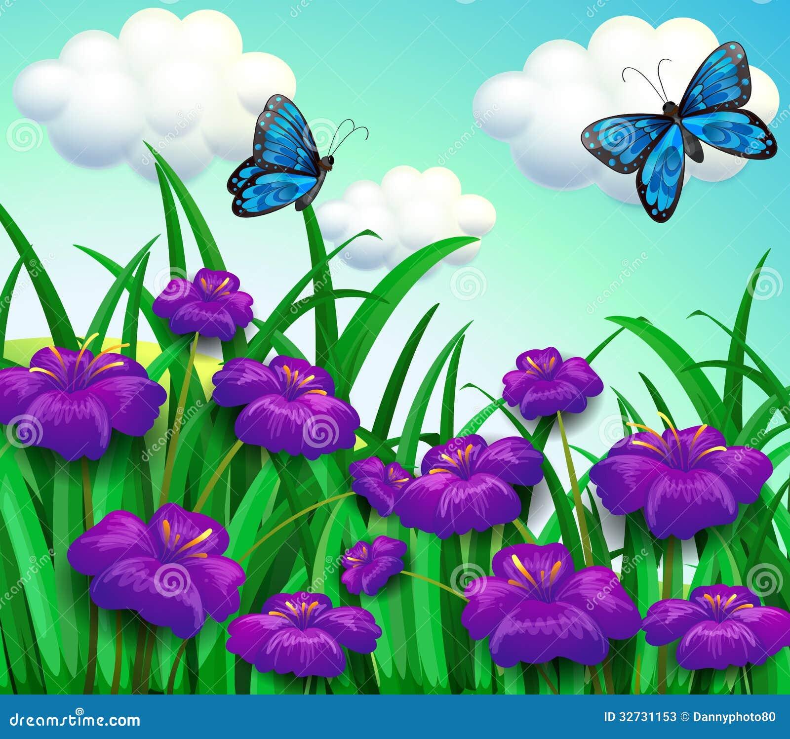 Dos Mariposas Azules En El Jardín Con Las Flores Violetas ...