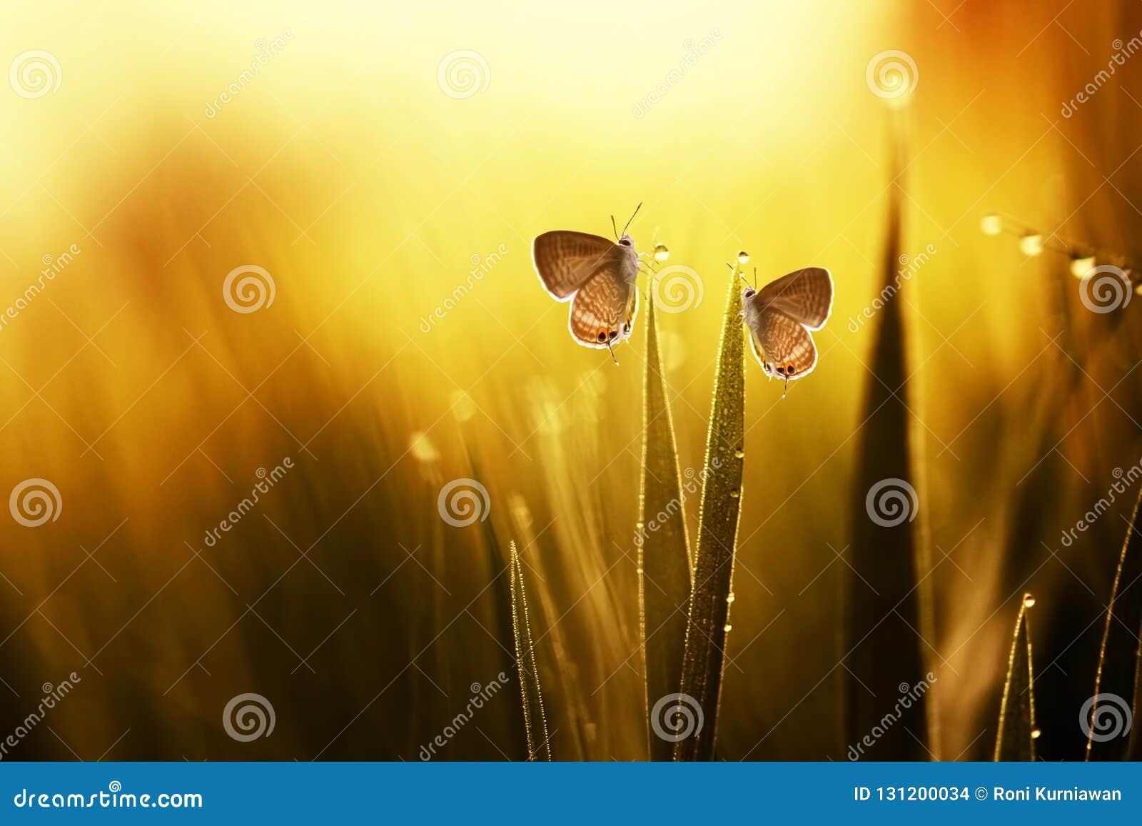 Dos mariposas en las hojas
