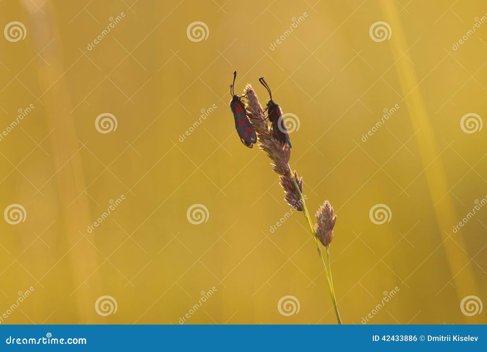 Dos mariposas se sientan enfrente de uno a