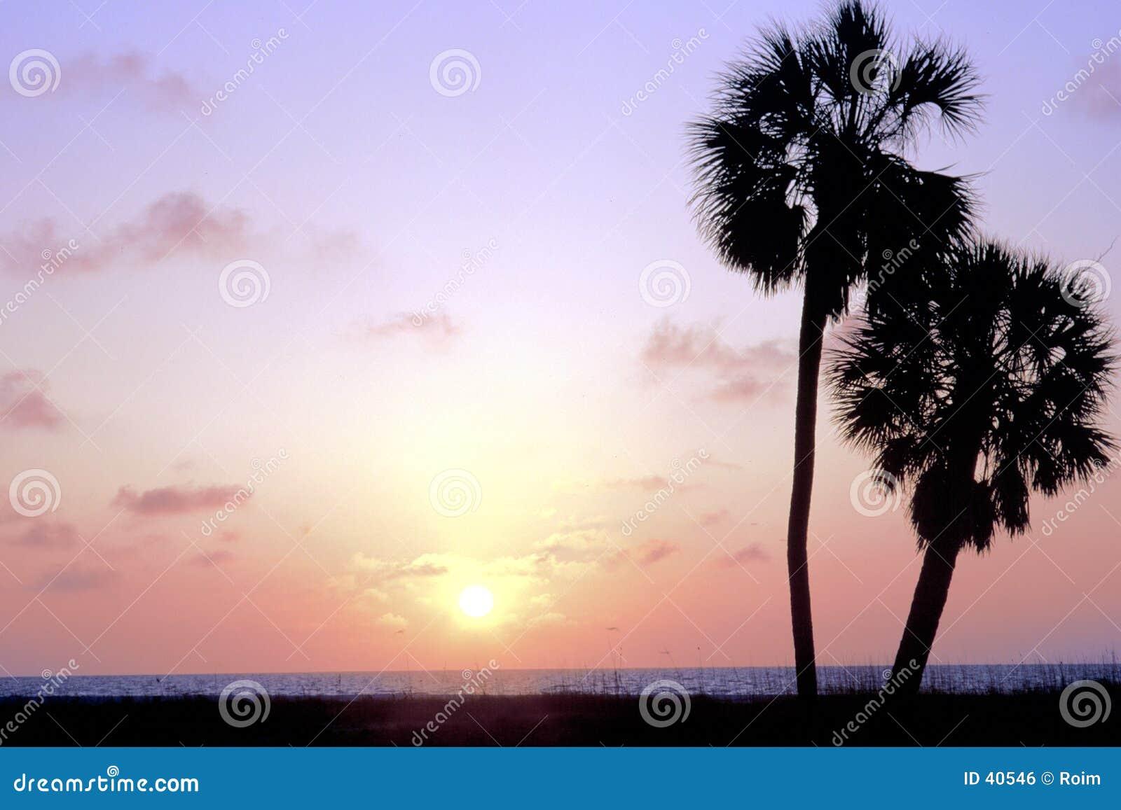 Download Dos palmeras foto de archivo. Imagen de florida, cielo, árboles - 40546