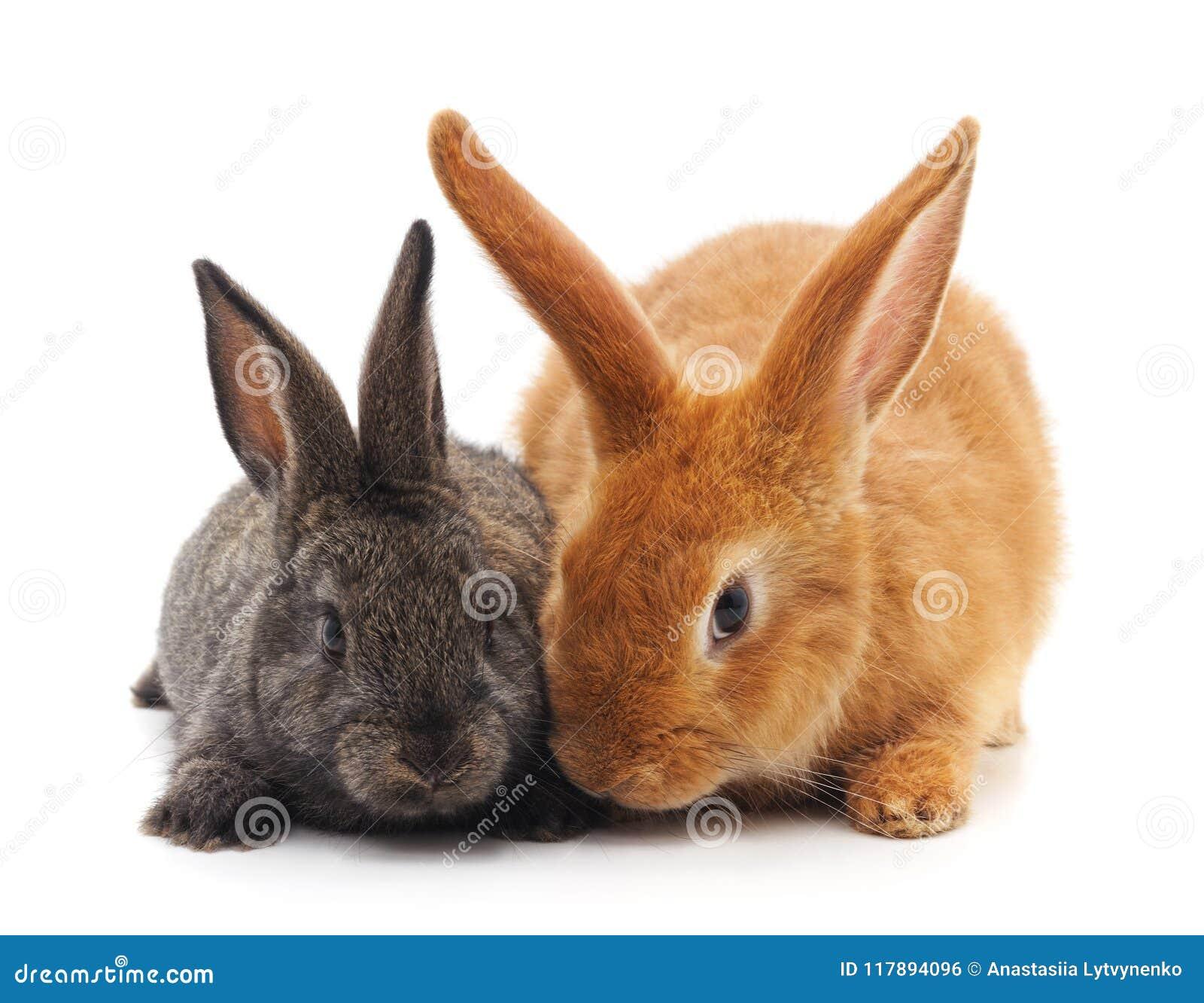 Dos pequeños conejos