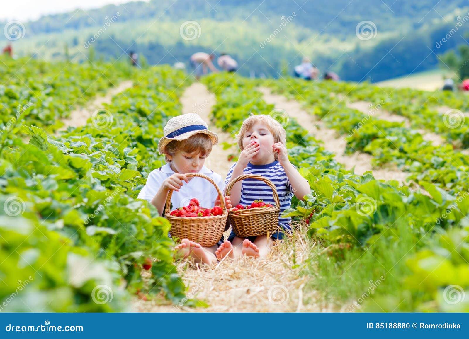 Dos pequeños muchachos del hermano en la fresa cultivan en verano