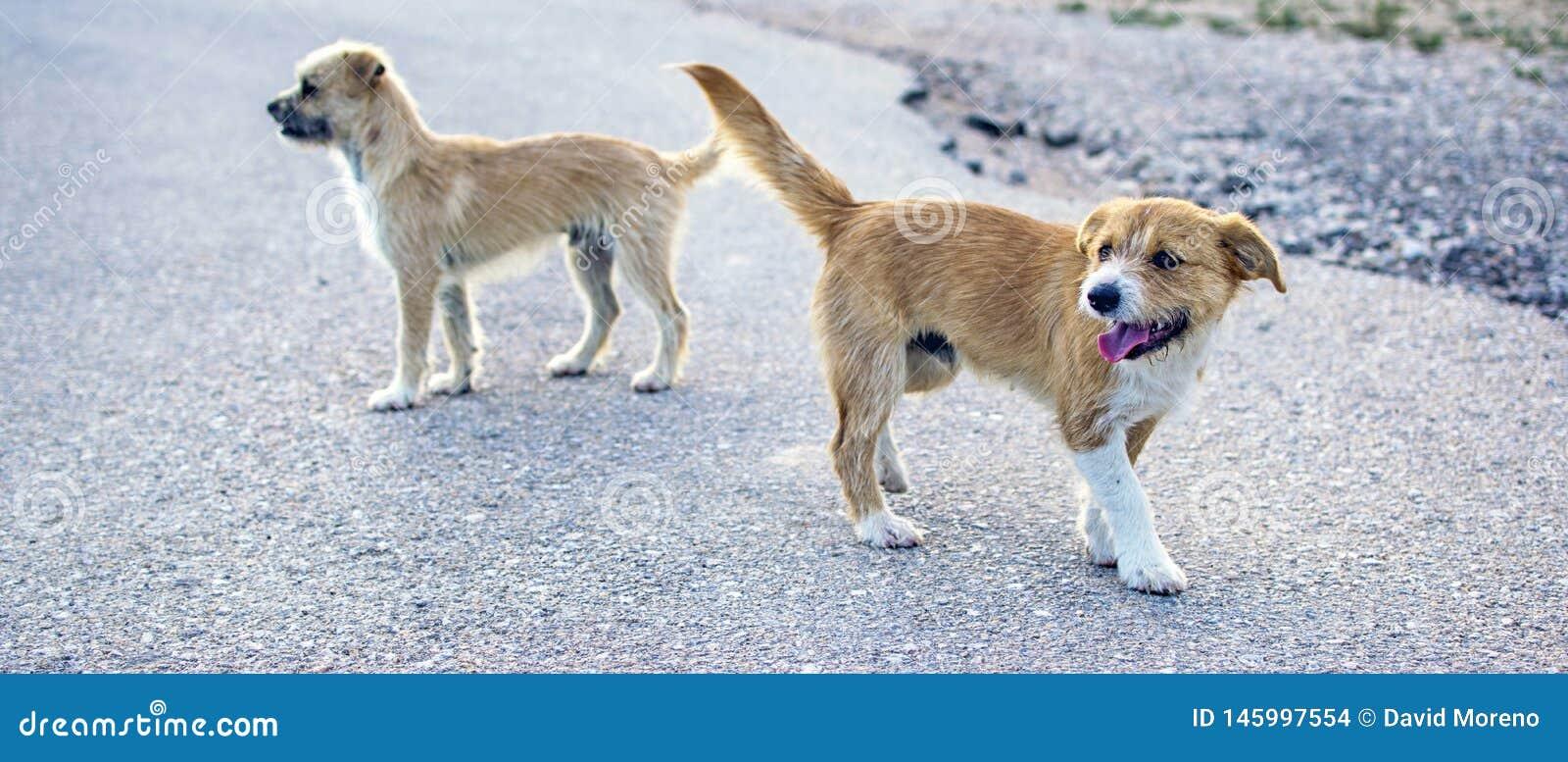 Dos peque?os perros perdidos abandonaron solo en el camino