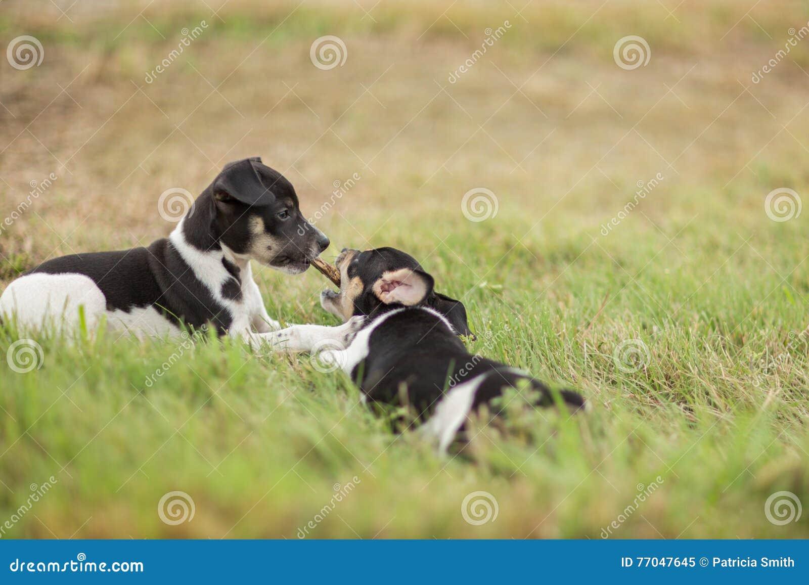 Dos perritos y un palillo