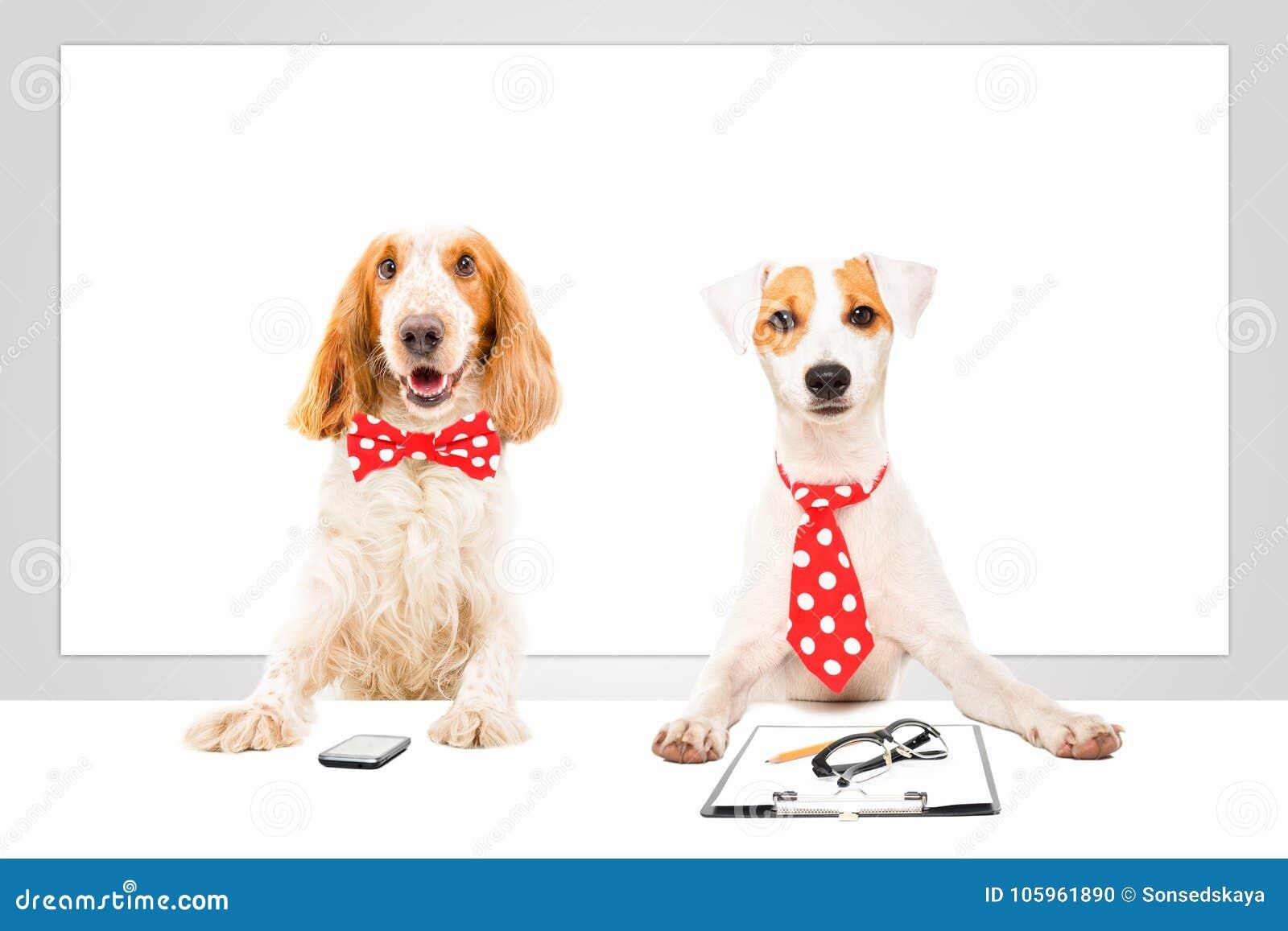 Dos perros del negocio