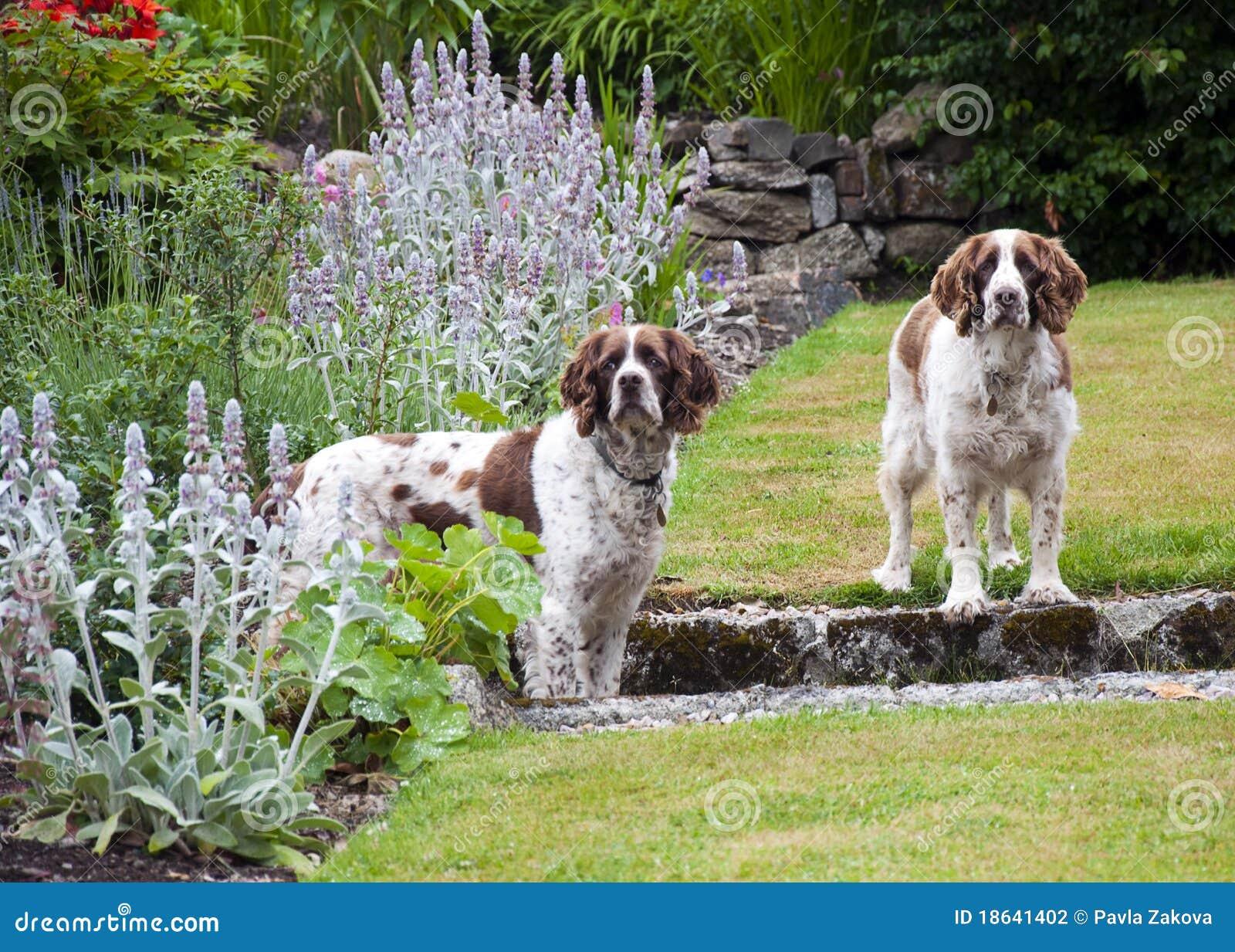 Dos perros en el jard n fotograf a de archivo imagen for Ahuyentar perros del jardin