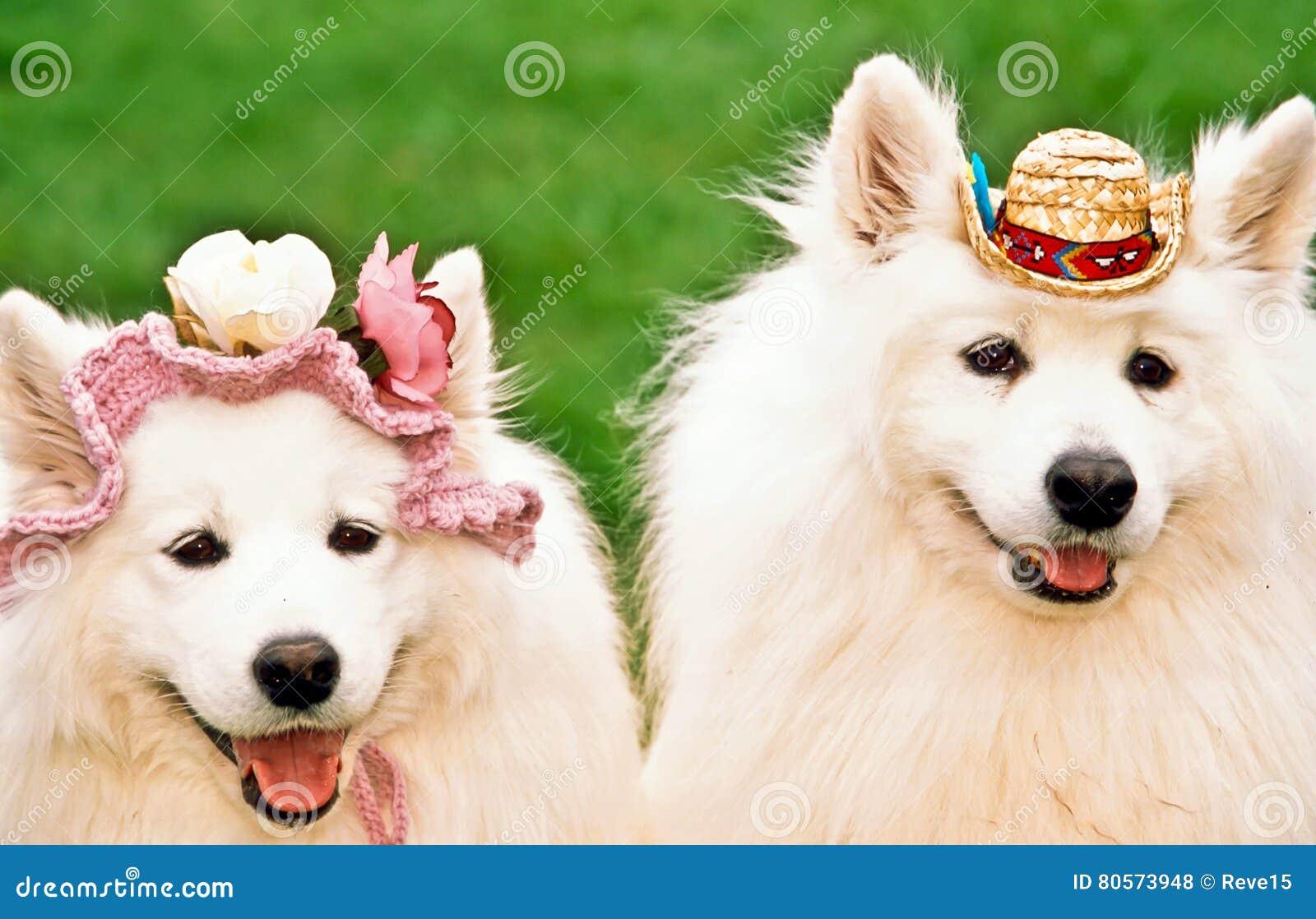 Dos perros felices
