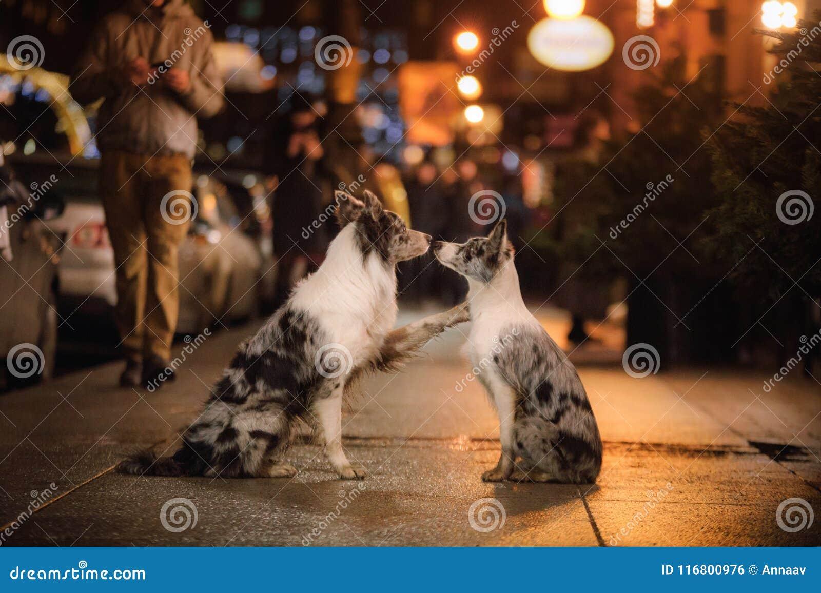 Dos perros junto en la ciudad por la tarde Amor y amistad