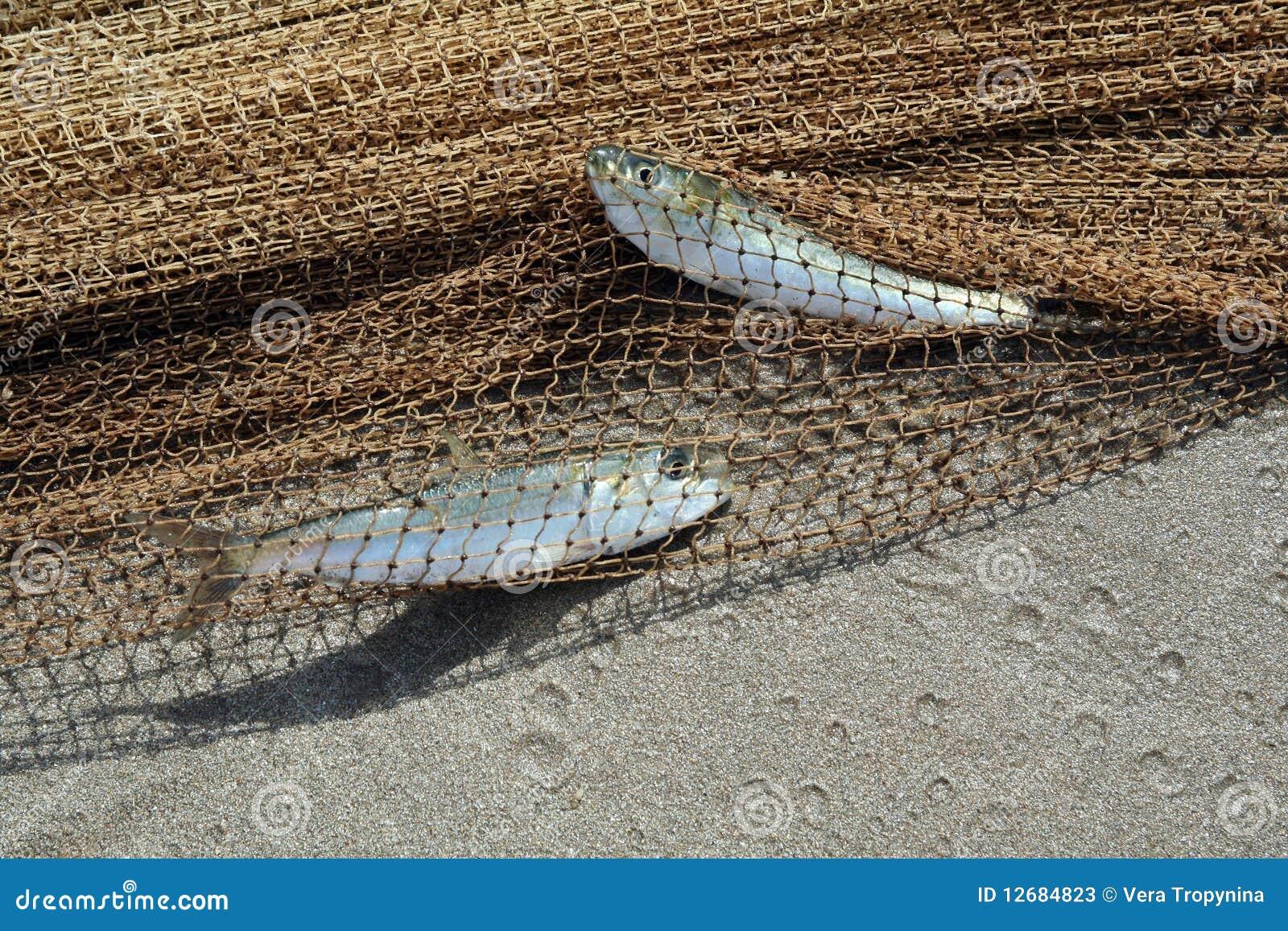 Dos pescados catched