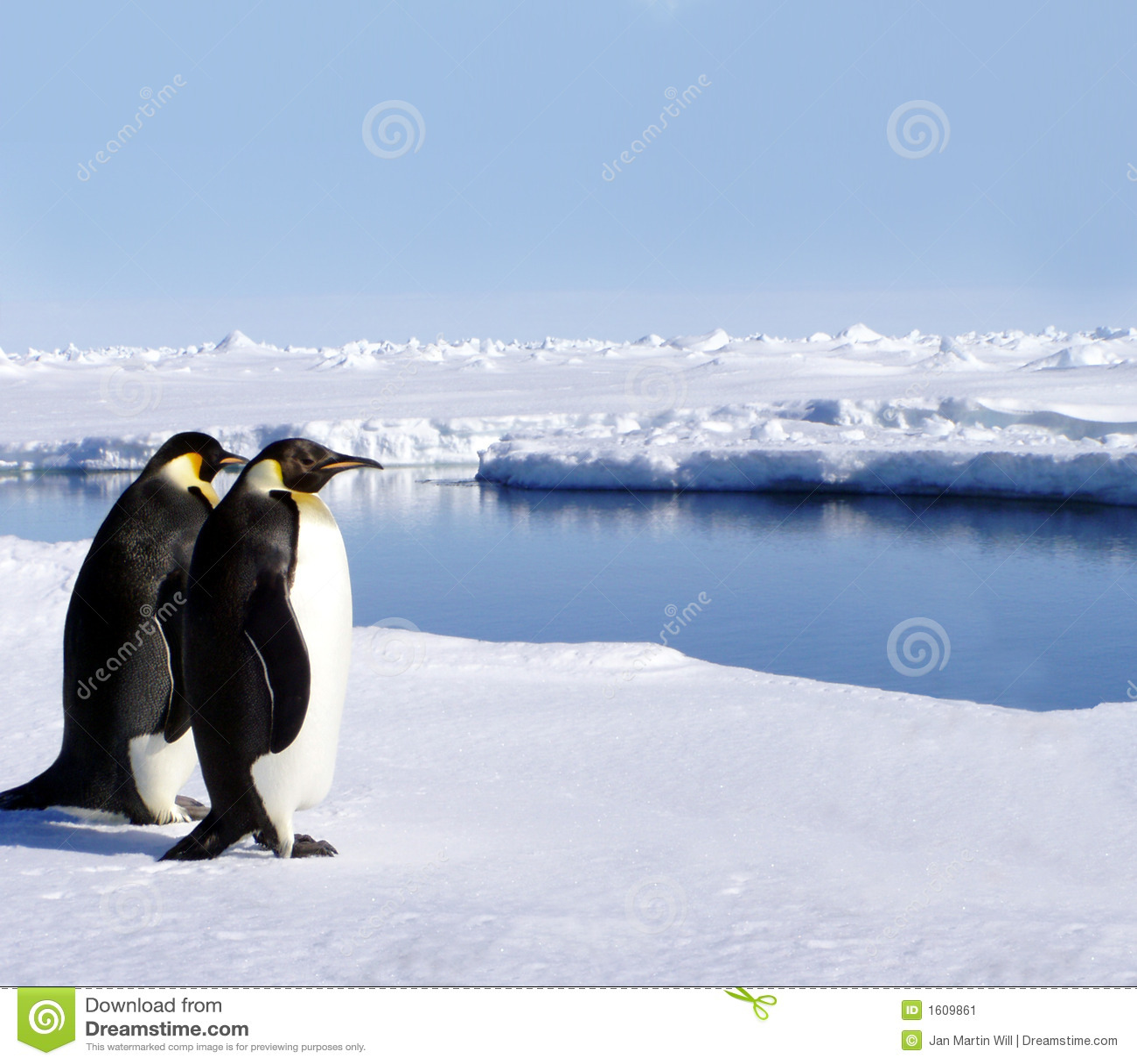 Dos pingüinos en Ant3artida