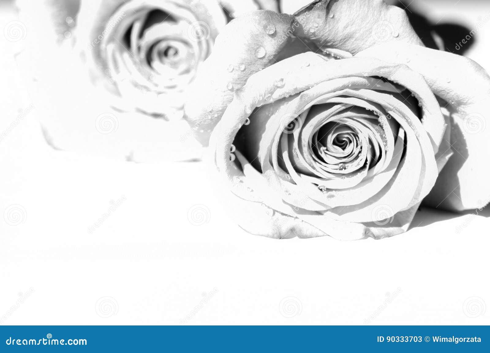 Dos rosas grises con el espacio de la copia