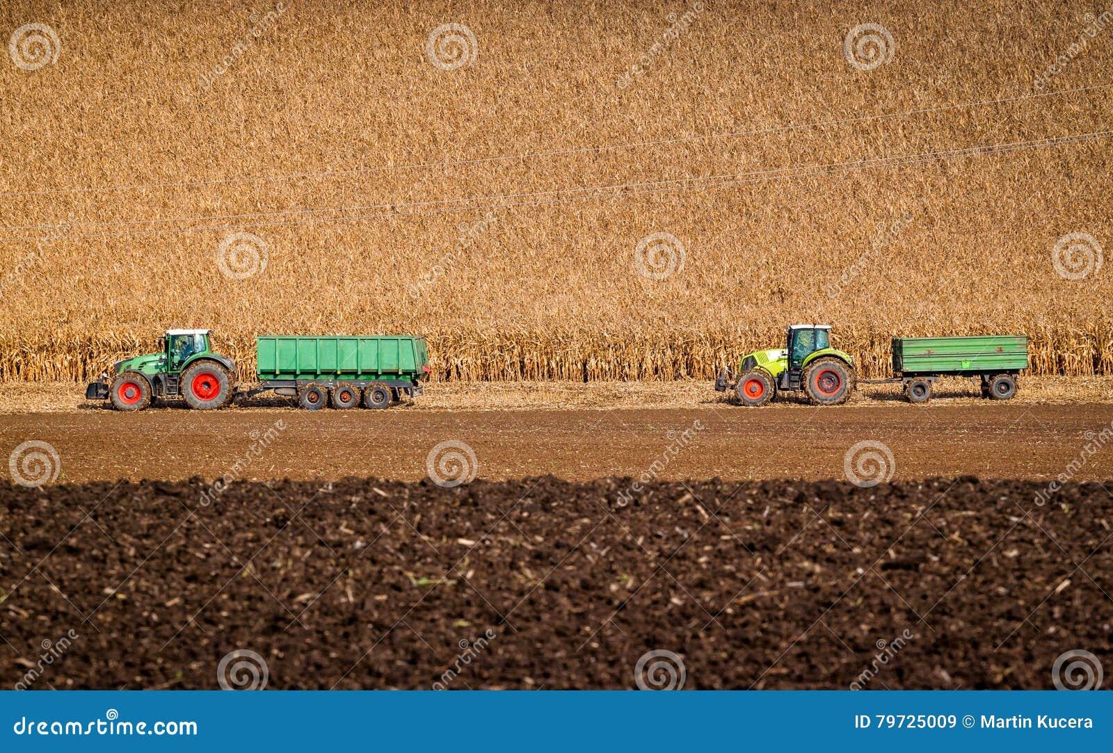 Dos tractores están listos para llevarse la cosecha del maíz en los campos del otoño