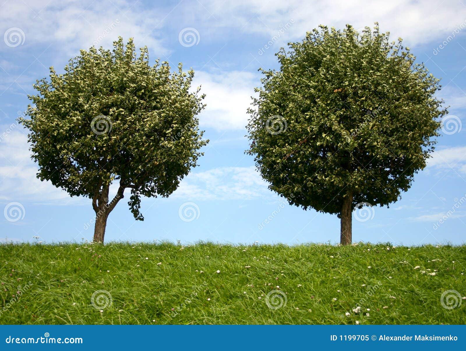 dos  u00e1rboles redondos imagen de archivo imagen de vector trees illustrator vector trees plan