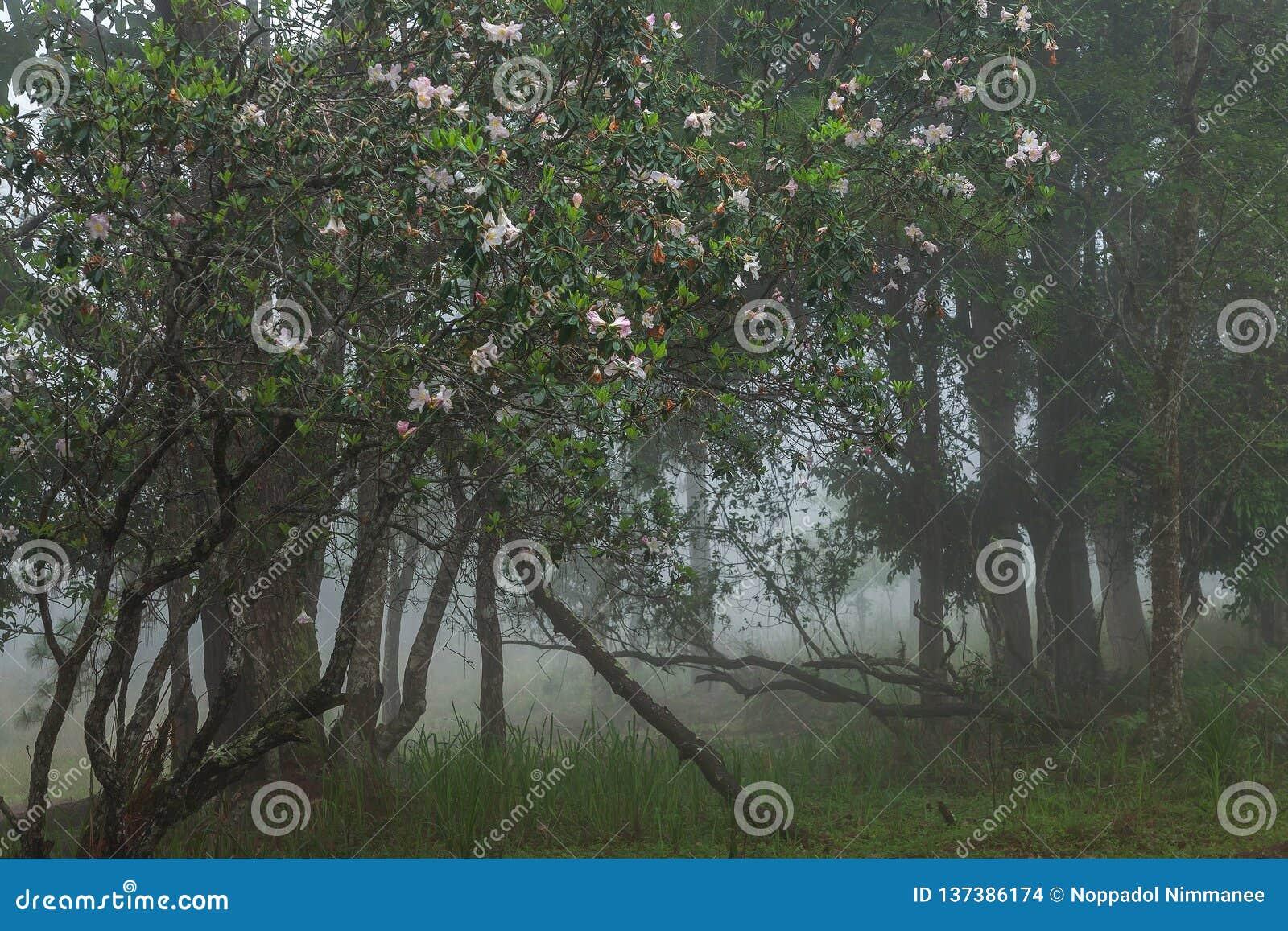 Doskonalić atmosfera las tropikalny z kwiatu polem, sosna i uczymy się
