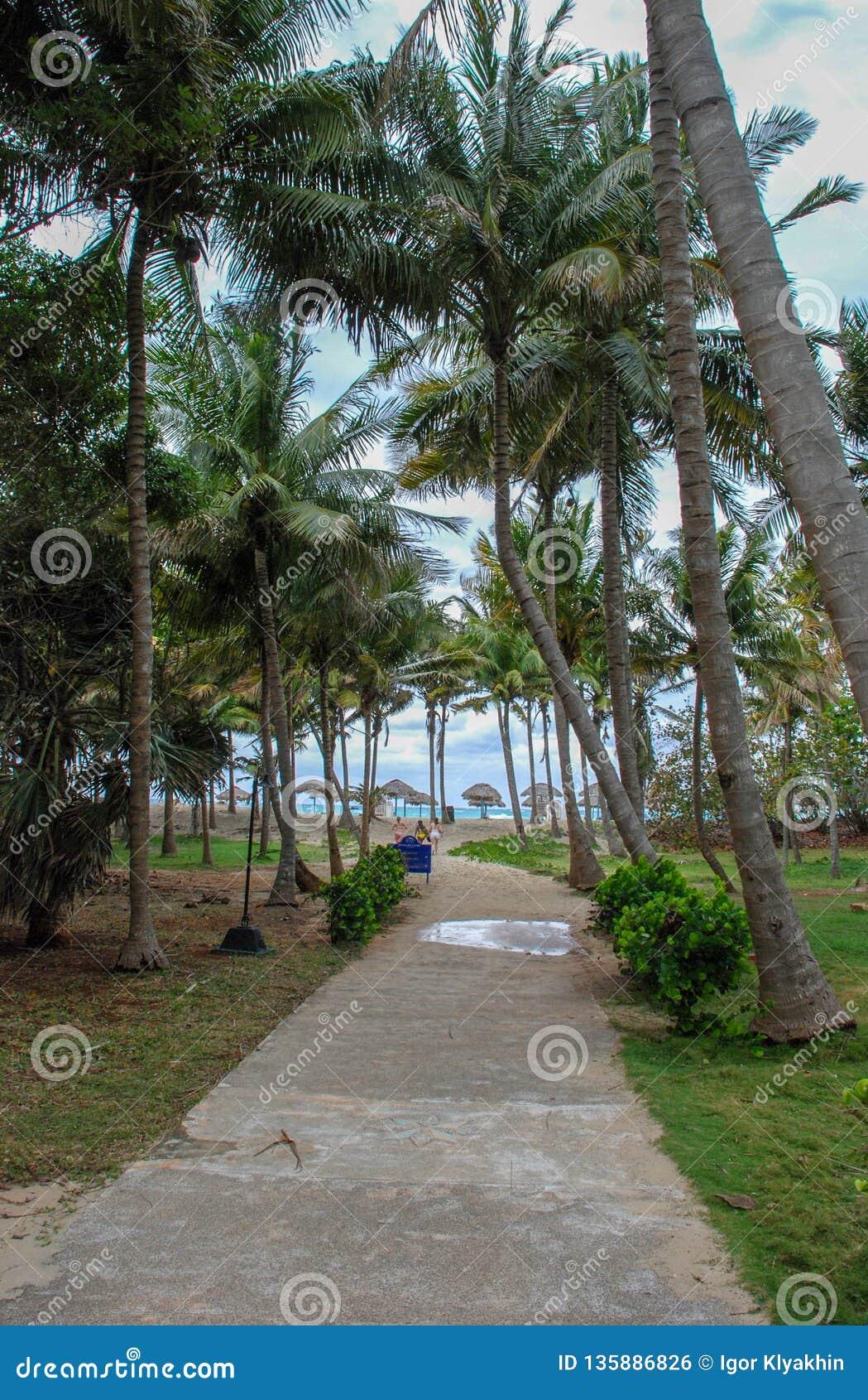 Dostęp plaża na ścieżce przez palmy
